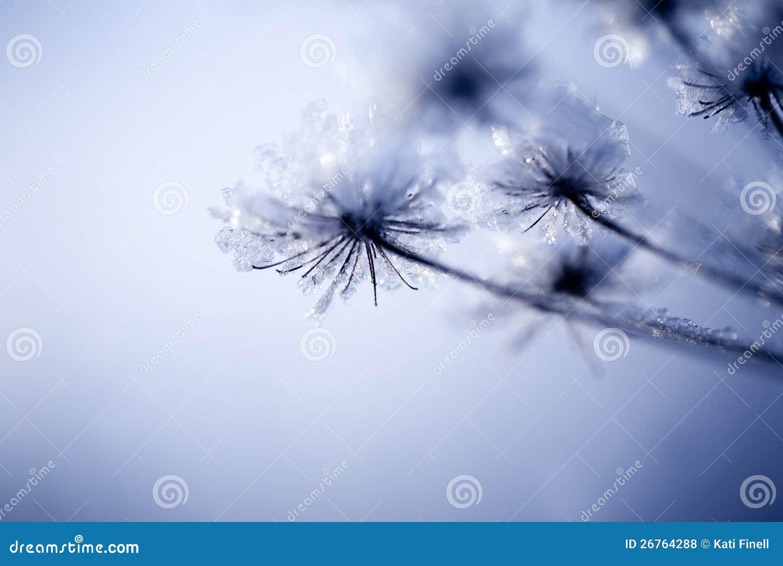 Detail van bevroren bloem