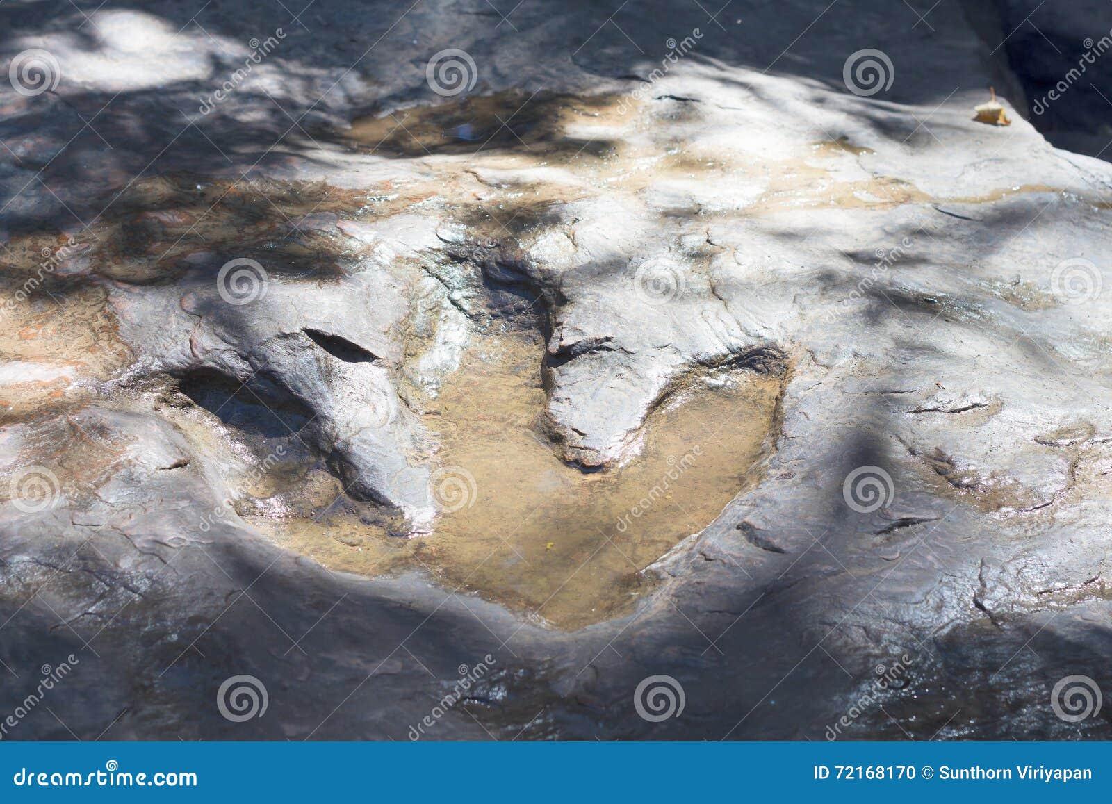 Detail van dinosaurussporen in Thailand (dinosaurus, voetafdrukken, foo