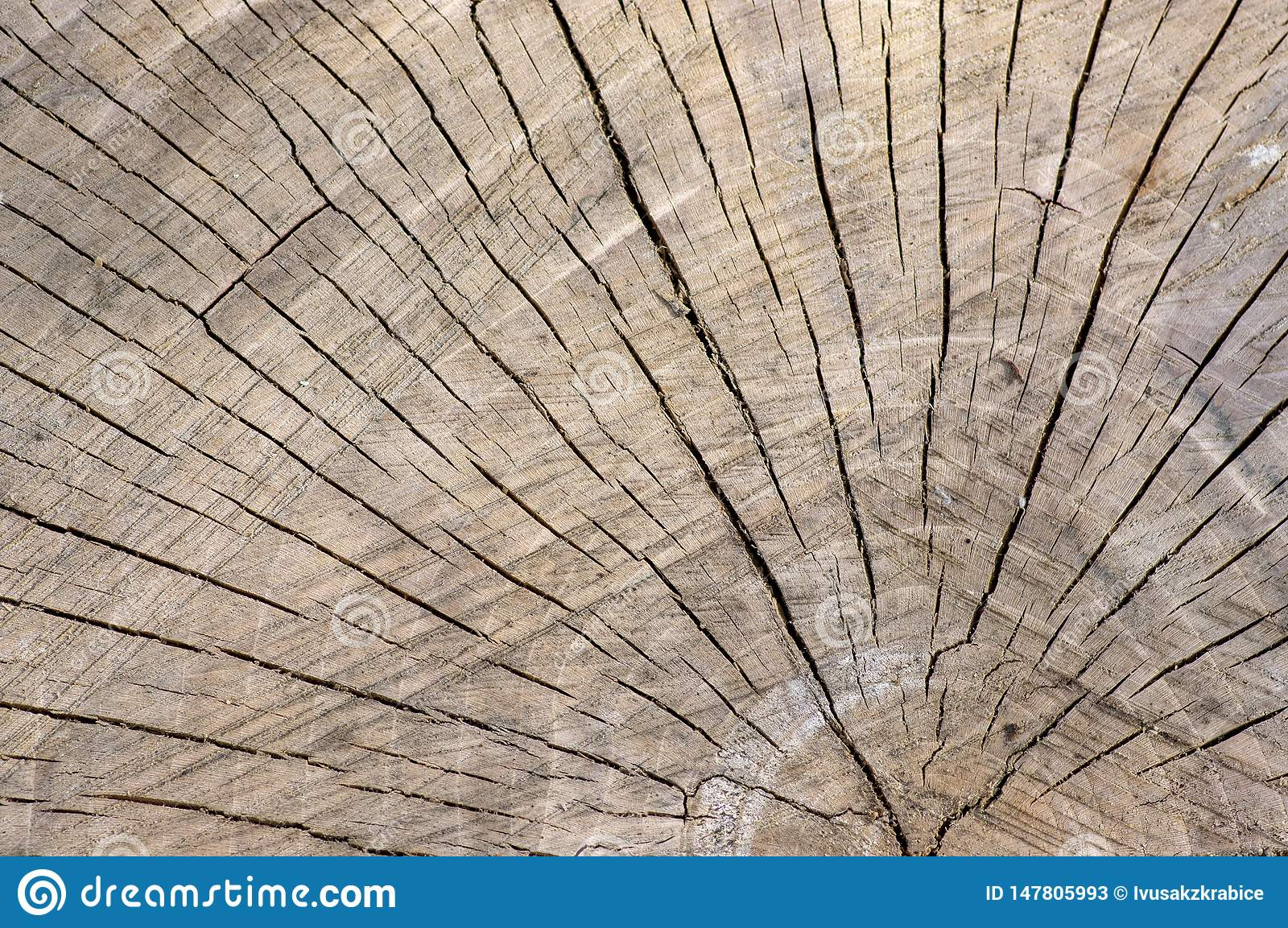 Detail of wooden stump, cut tree log, beautiful wood structure, textured ages