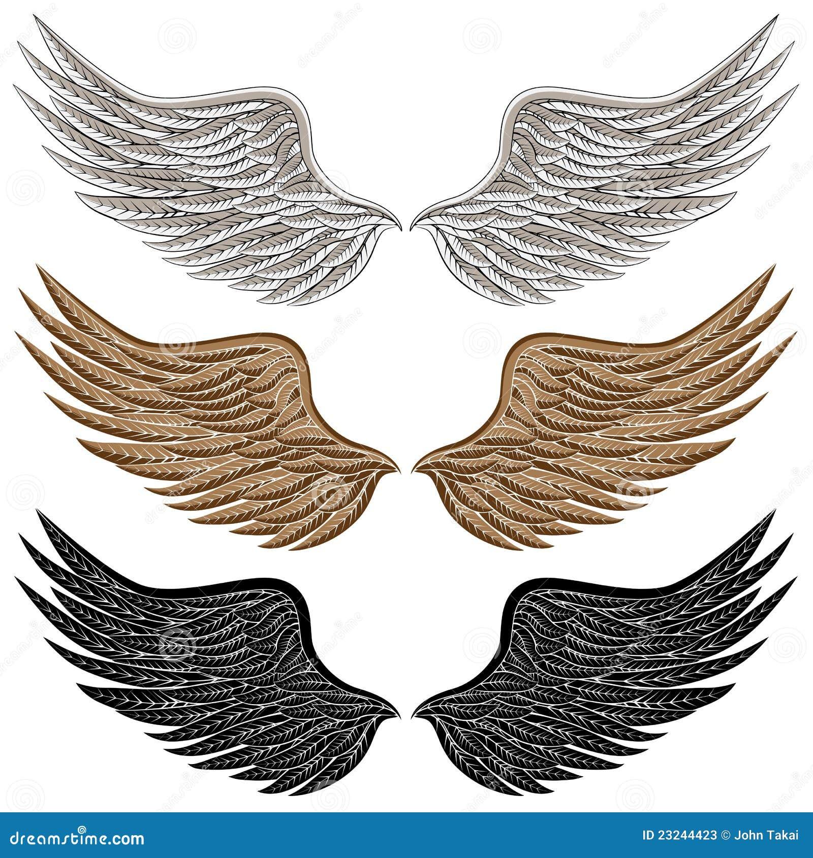 Detailed Bird Wings Stock Photos - Image: 23244423
