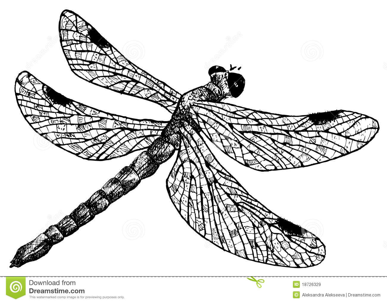 detailed dragonfly pencil drawing style stock vector illustration of nature wild 18726329. Black Bedroom Furniture Sets. Home Design Ideas