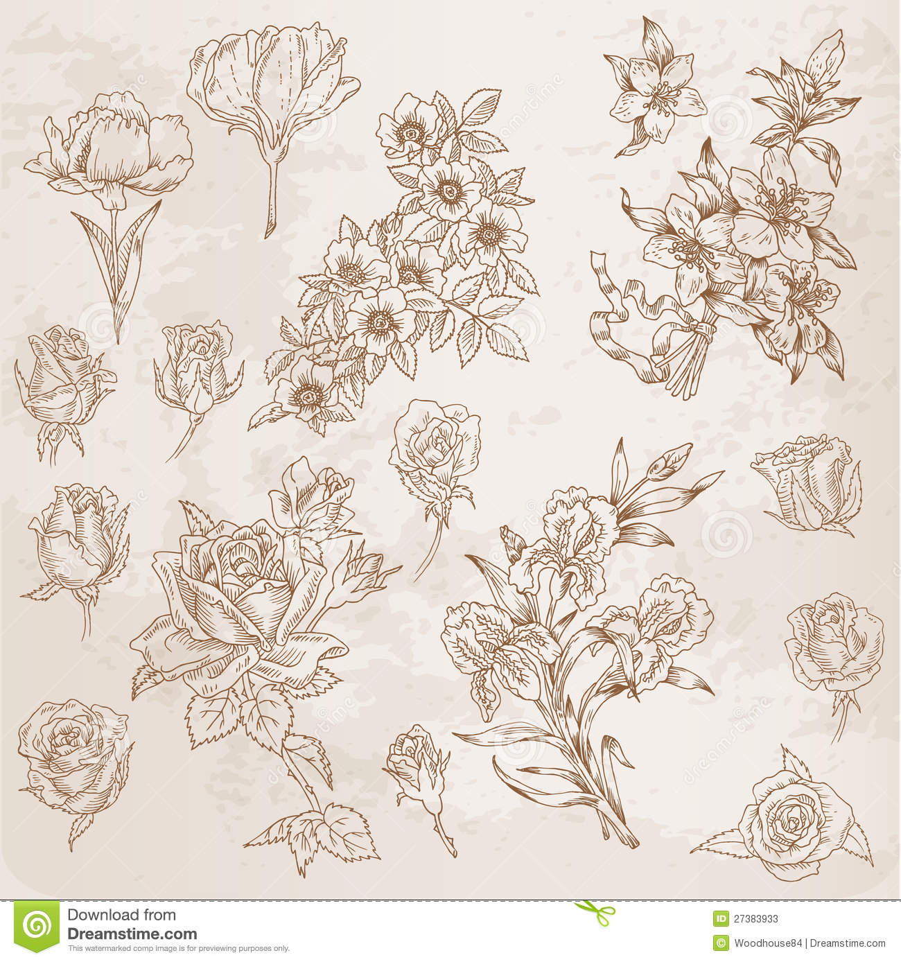 Detailed Hand Drawn Flowers Stock Vector - Image: 27383933