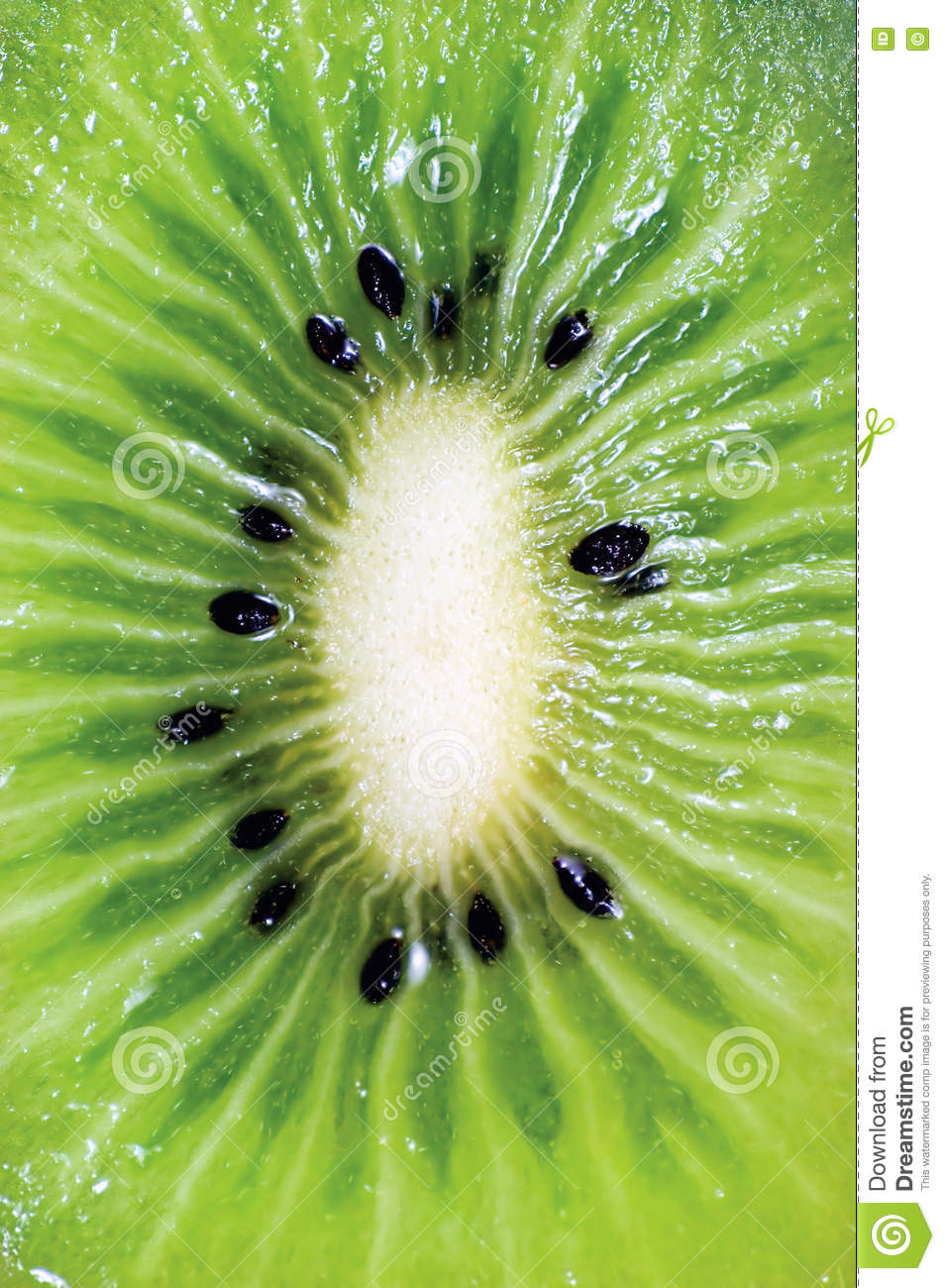 Kiwi Fruit Cut Pictures