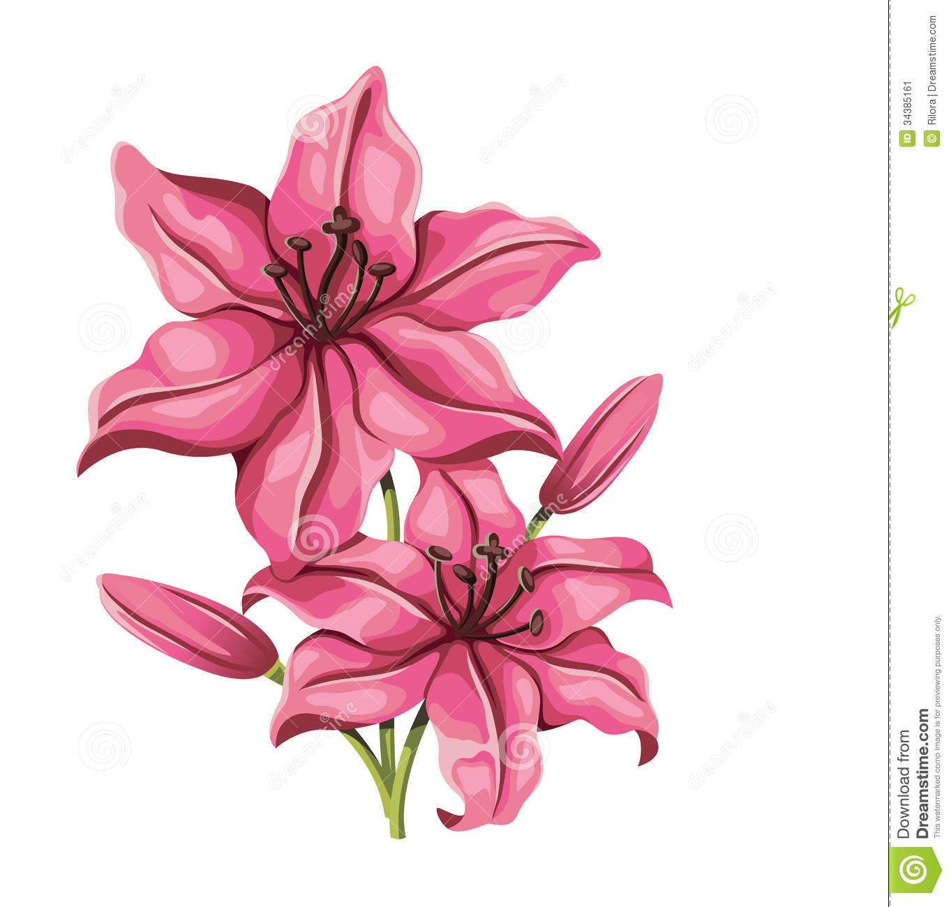 Detailed Lily Flower In Vintage Style. Vector Stock Vector ...