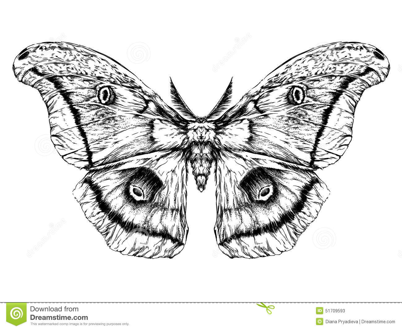 Detailed Realistic Sketch Of A Butterfly Moth Stock