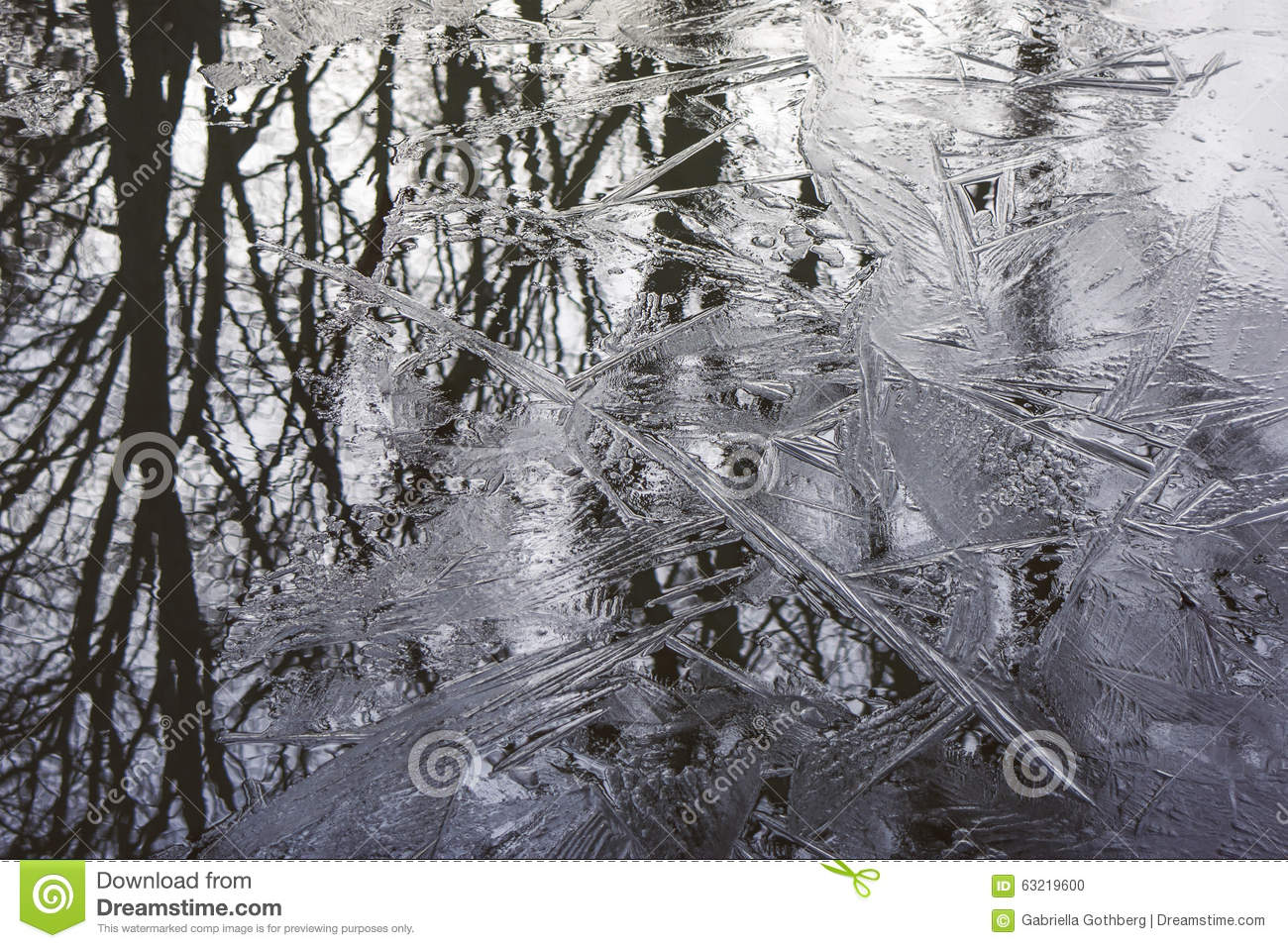 Details of trees reflected in ice and water.