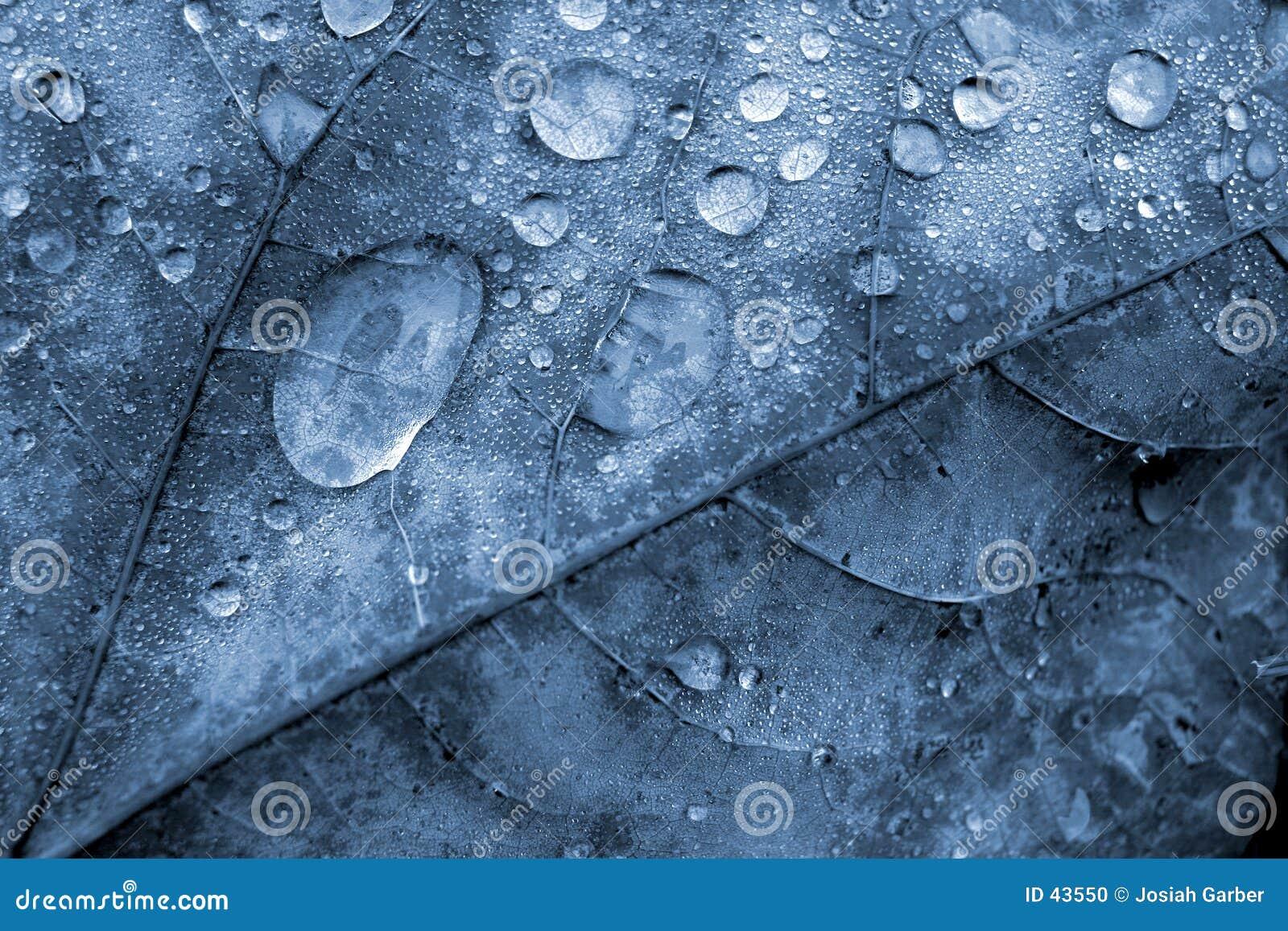 Detalhe da folha com gotas de água