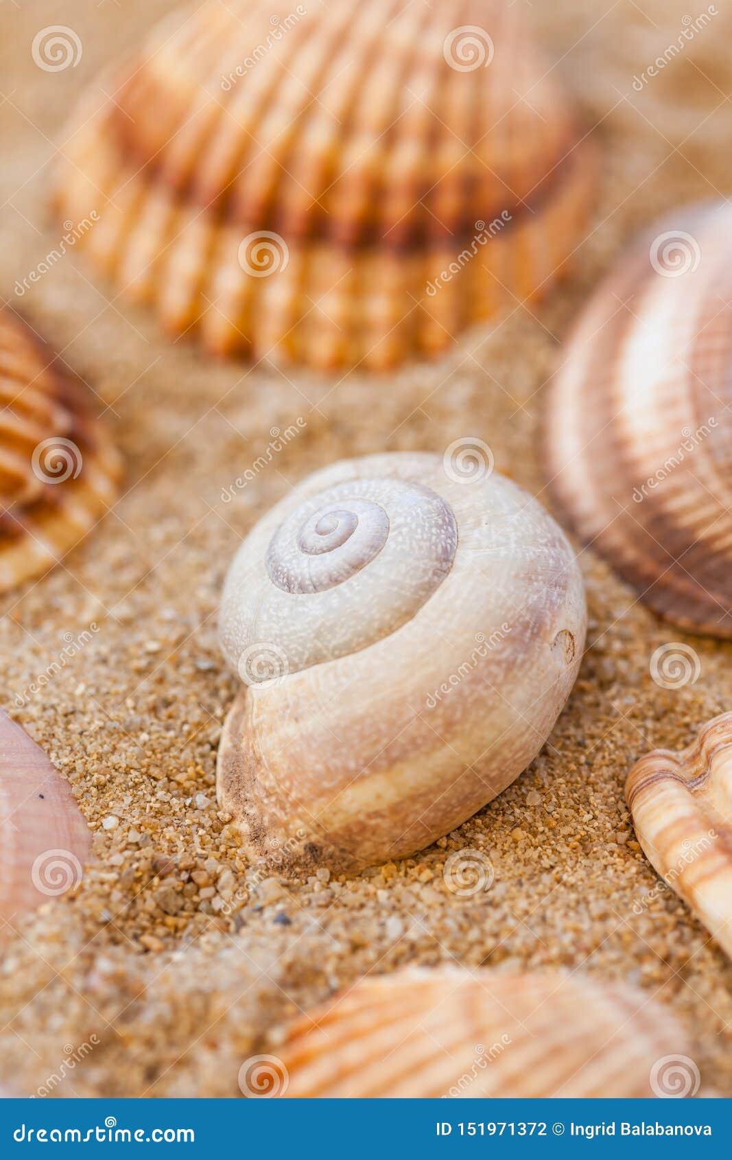 Detalhe de escudos do mar com areia