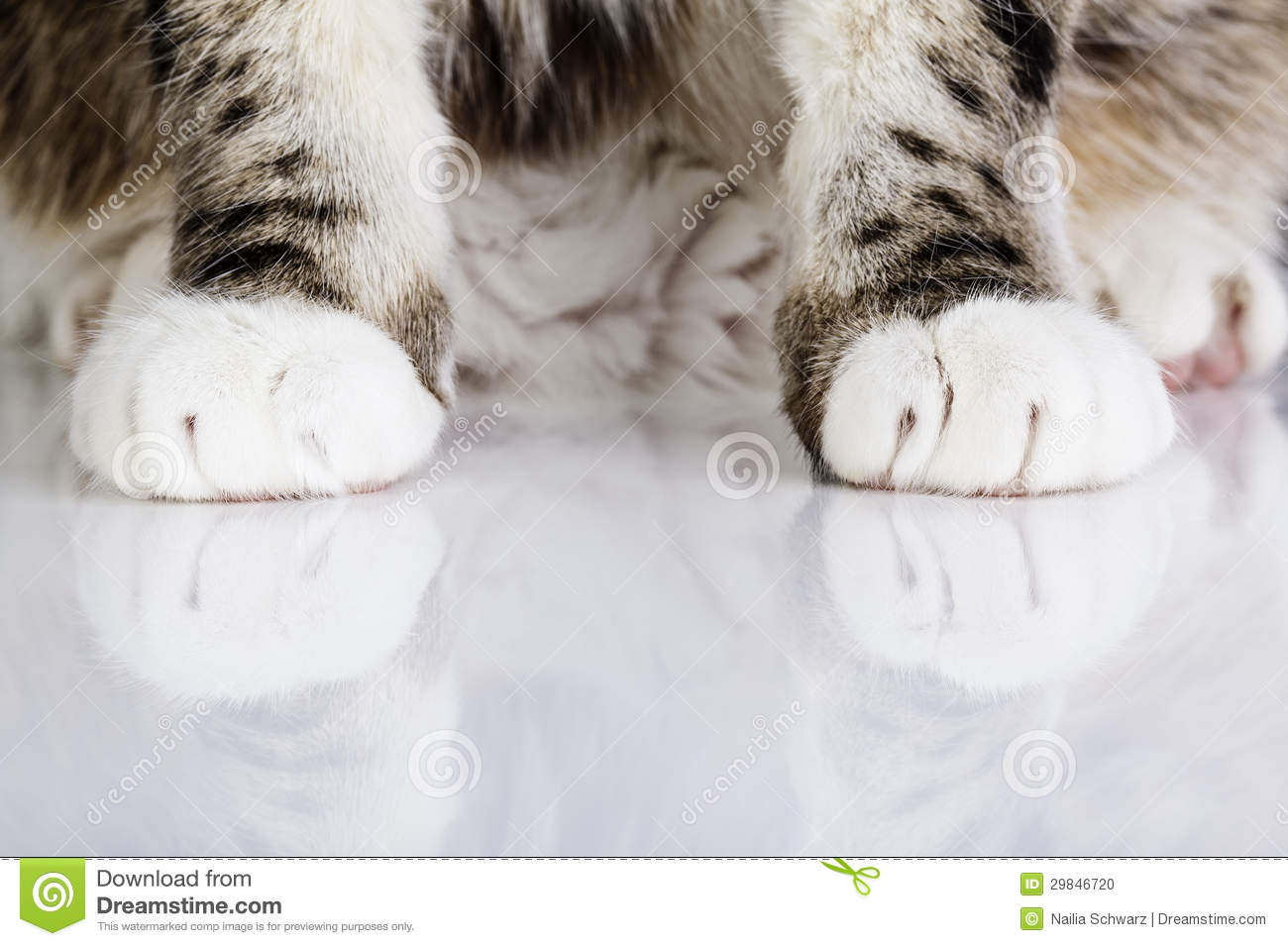 Pussyfoot