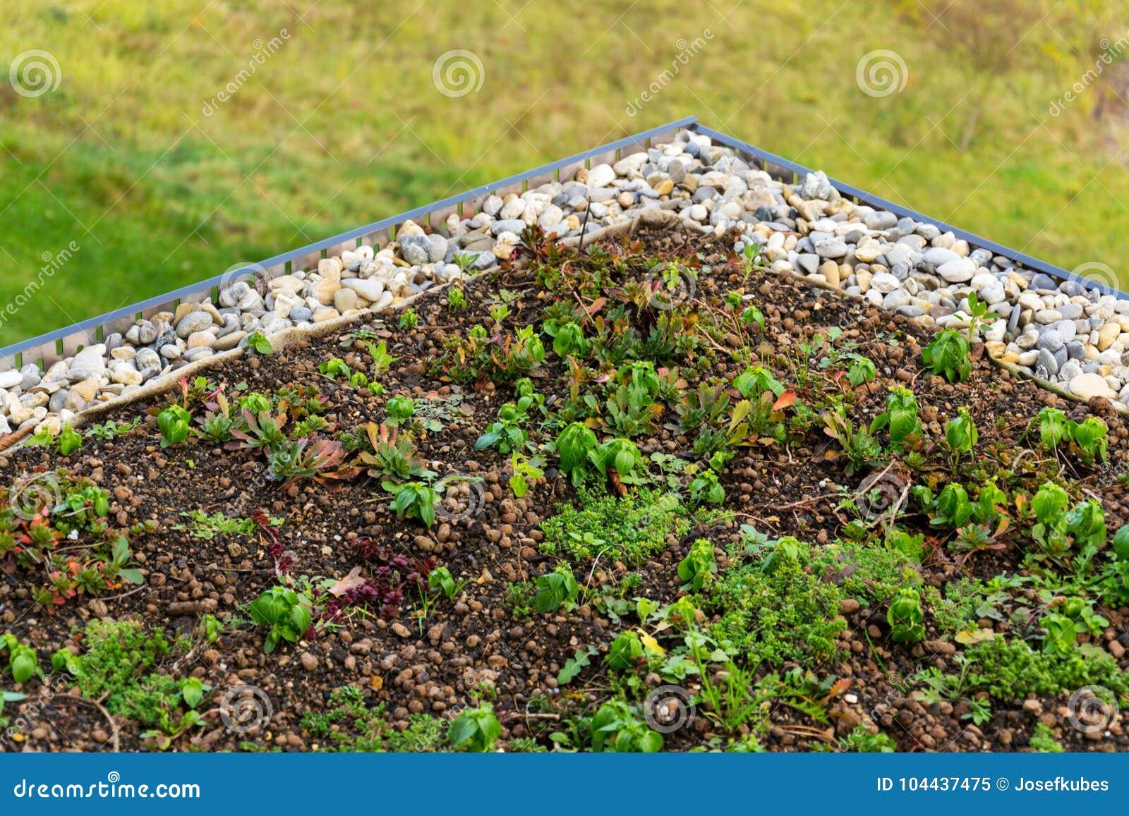 Detalhe de pedras na vegetação viva verde extensiva do telhado coberta