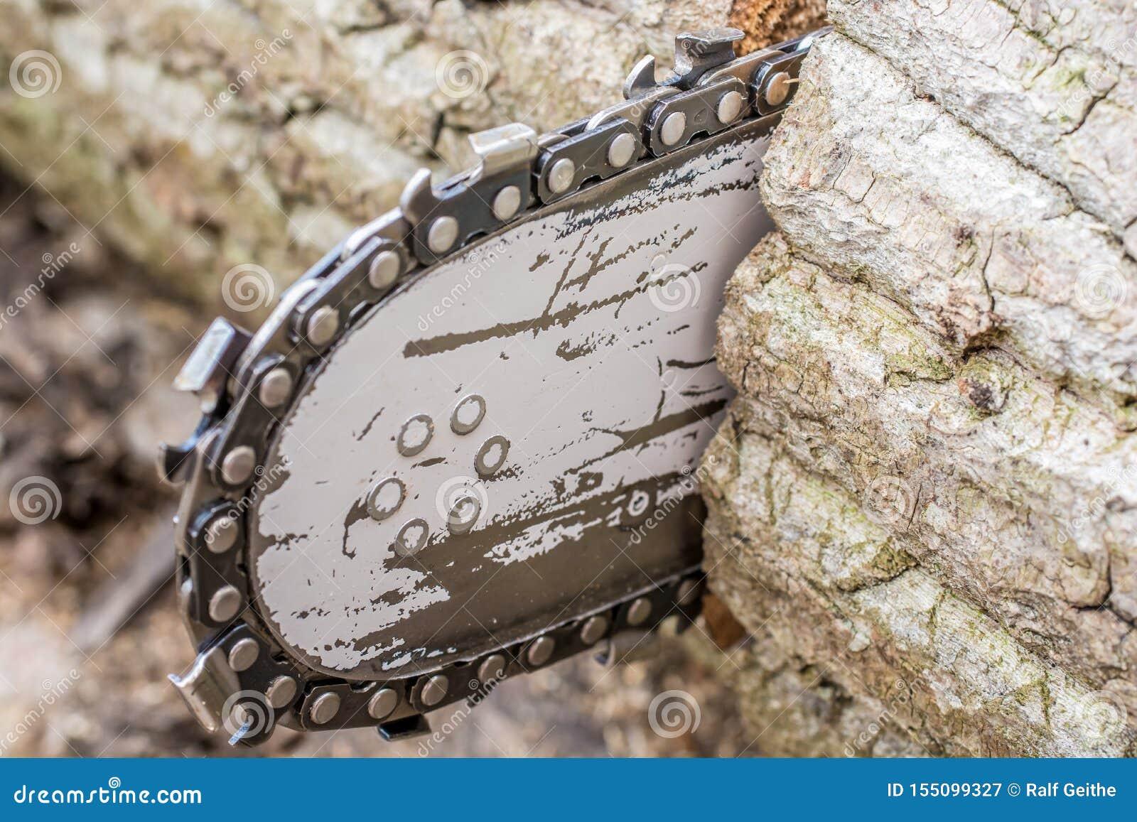 Detalhe de uma serra de cadeia ao ver um tronco de árvore