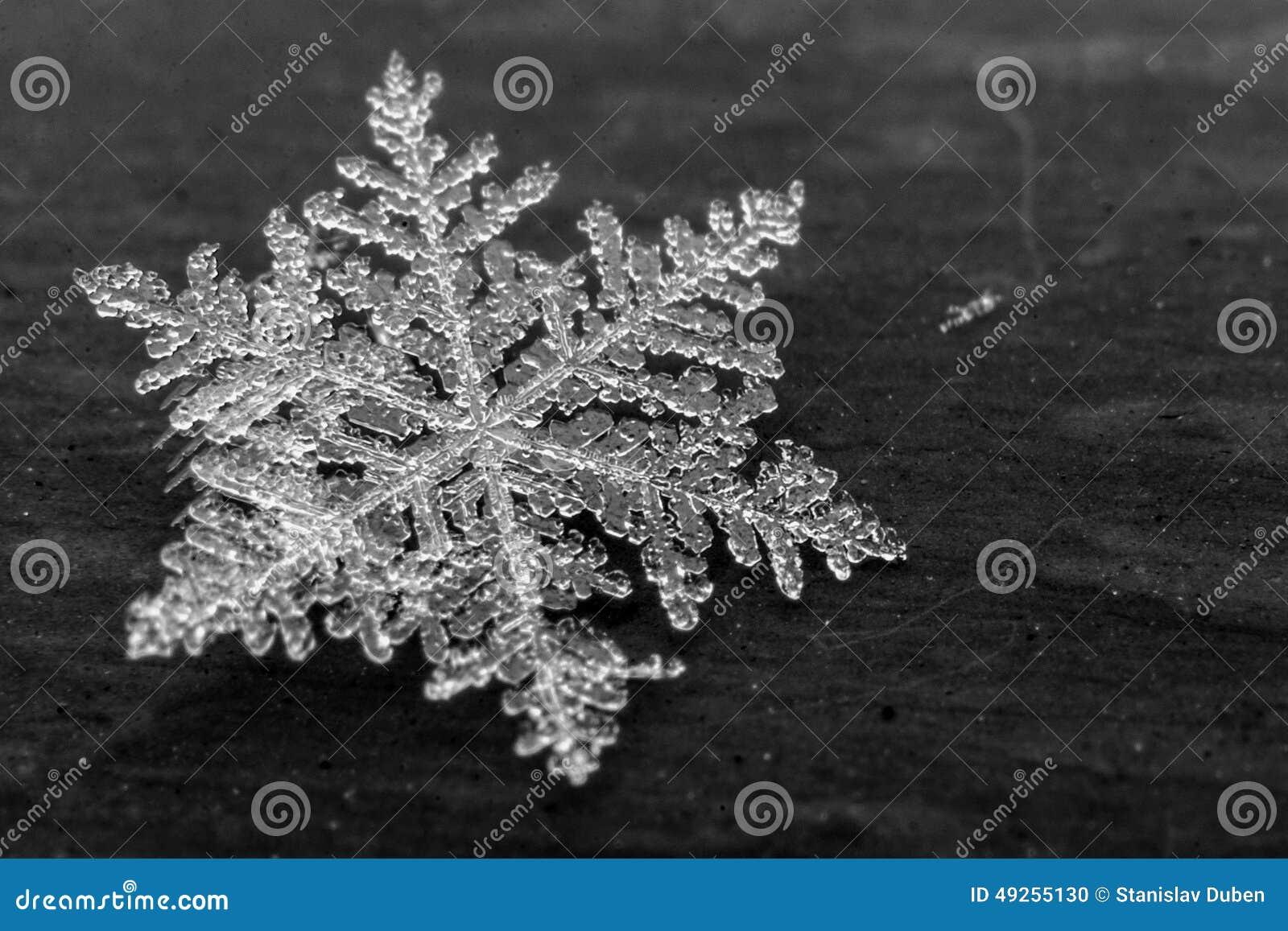 Detalhe do floco de neve