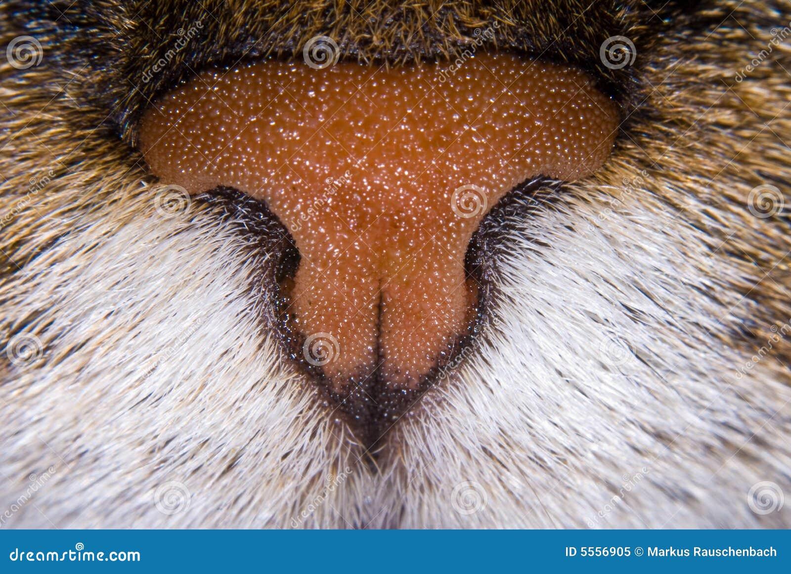 Detalhes de nariz dos gatos