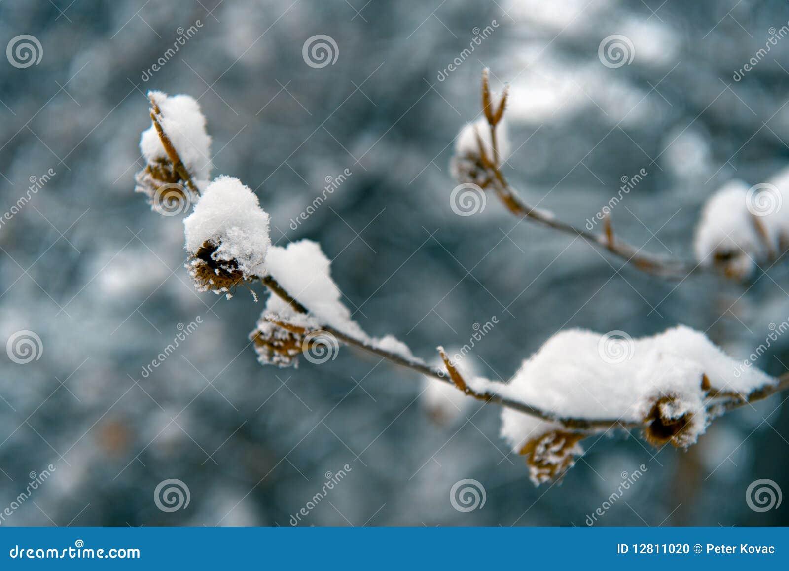 Detalhes do inverno