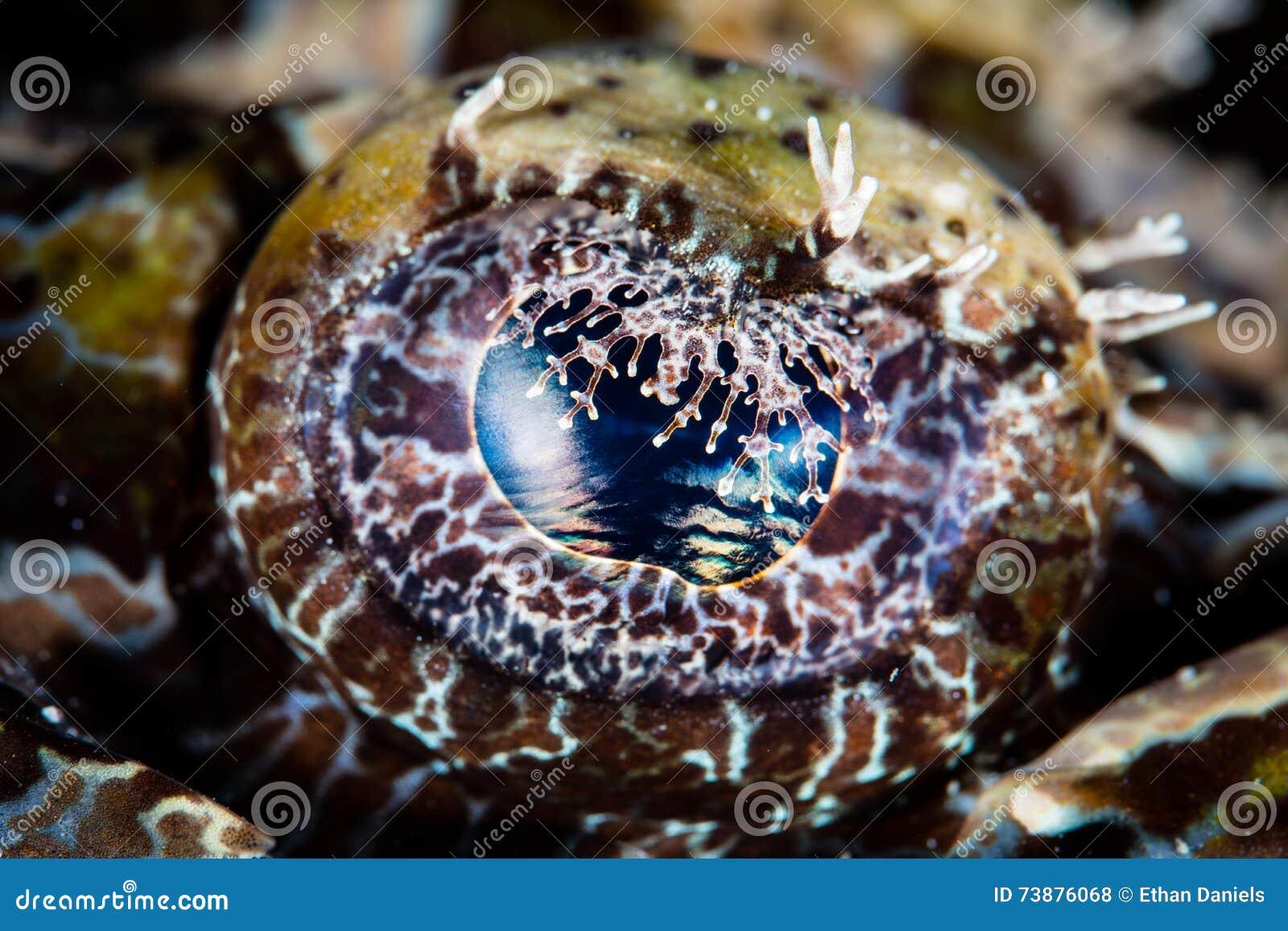 Detalj av det Crocodilefish ögat