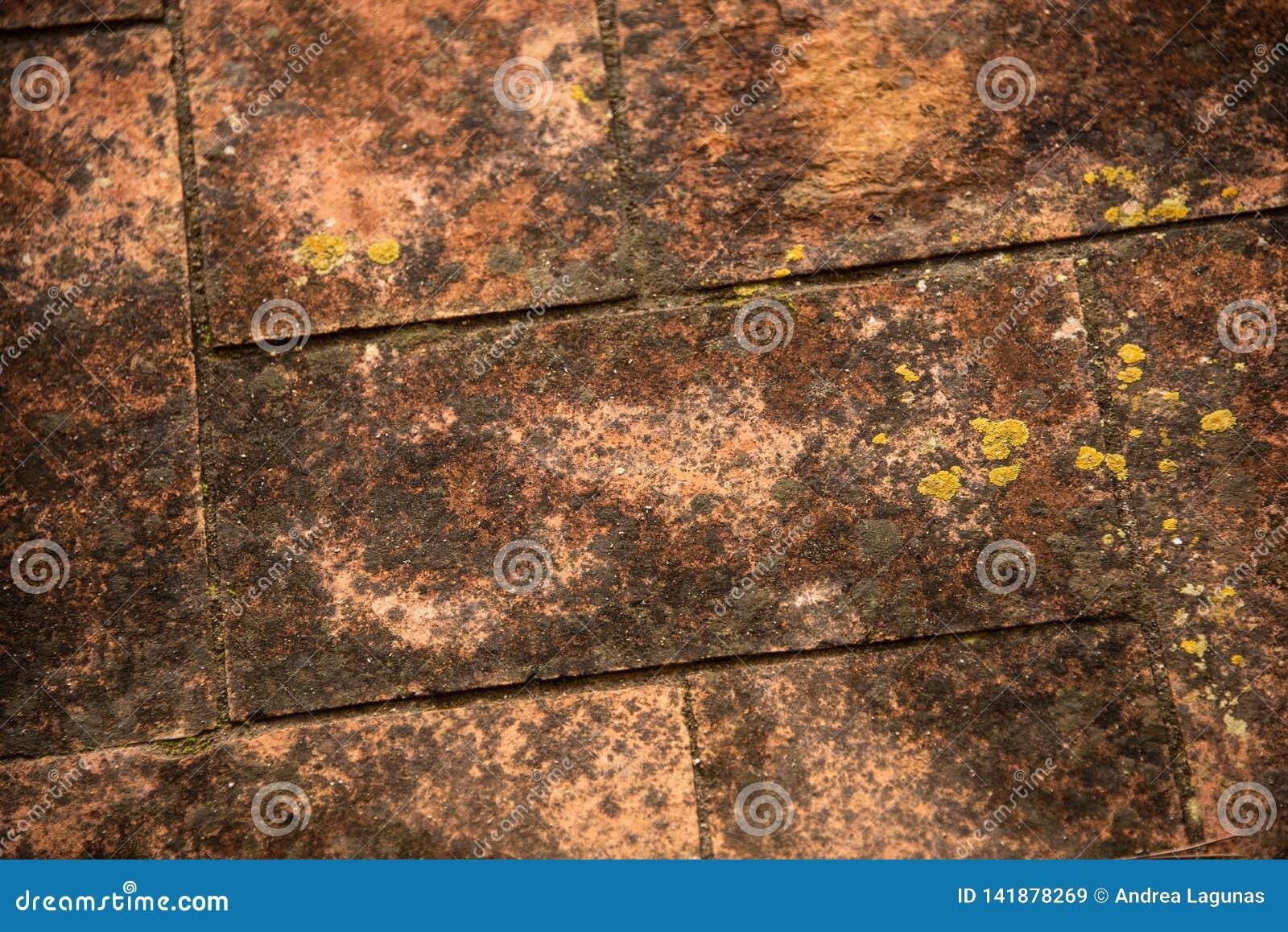 Detalj av ett gammalt golv med mossa