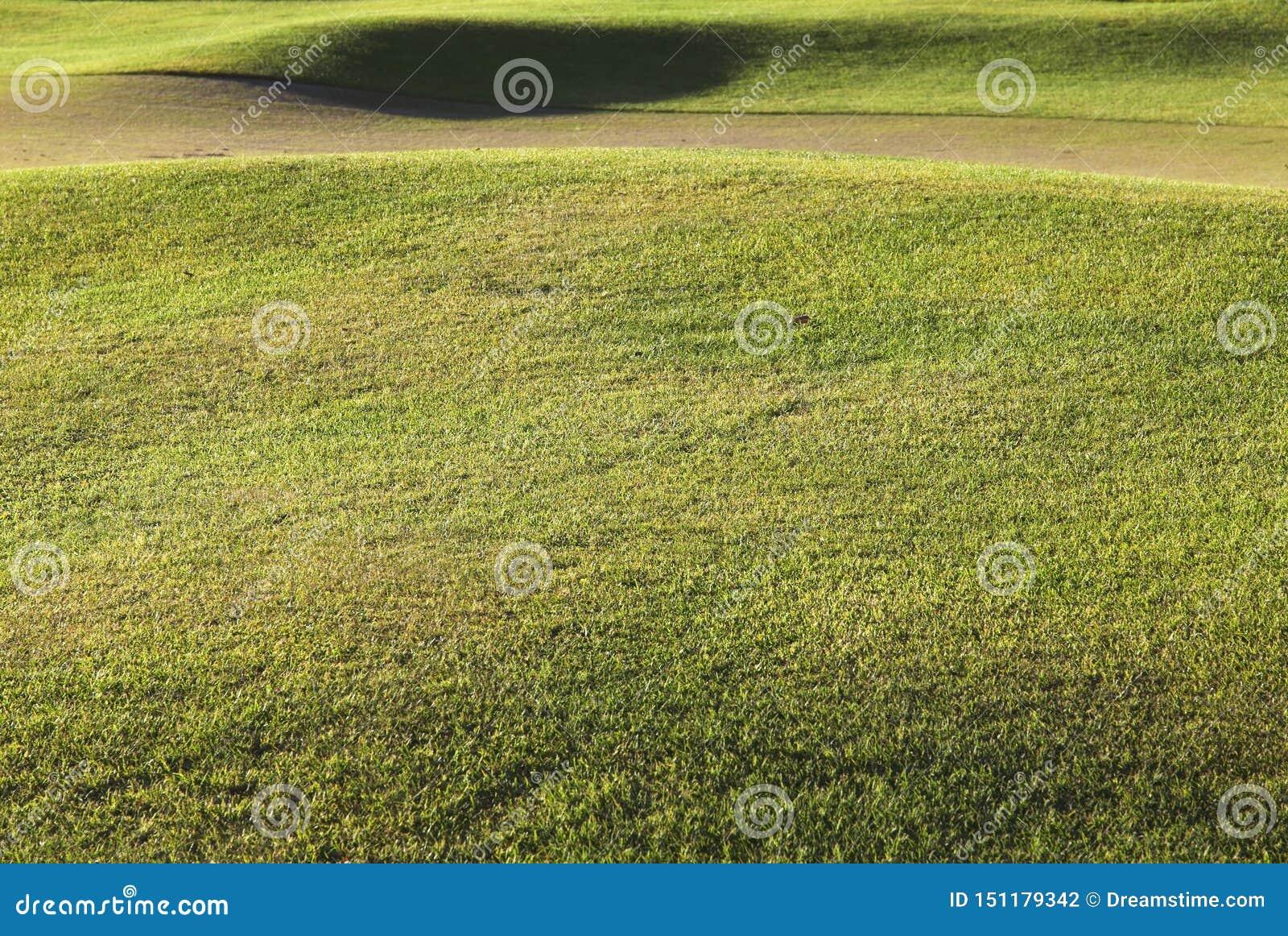 Detalj av ett golfbanagräs