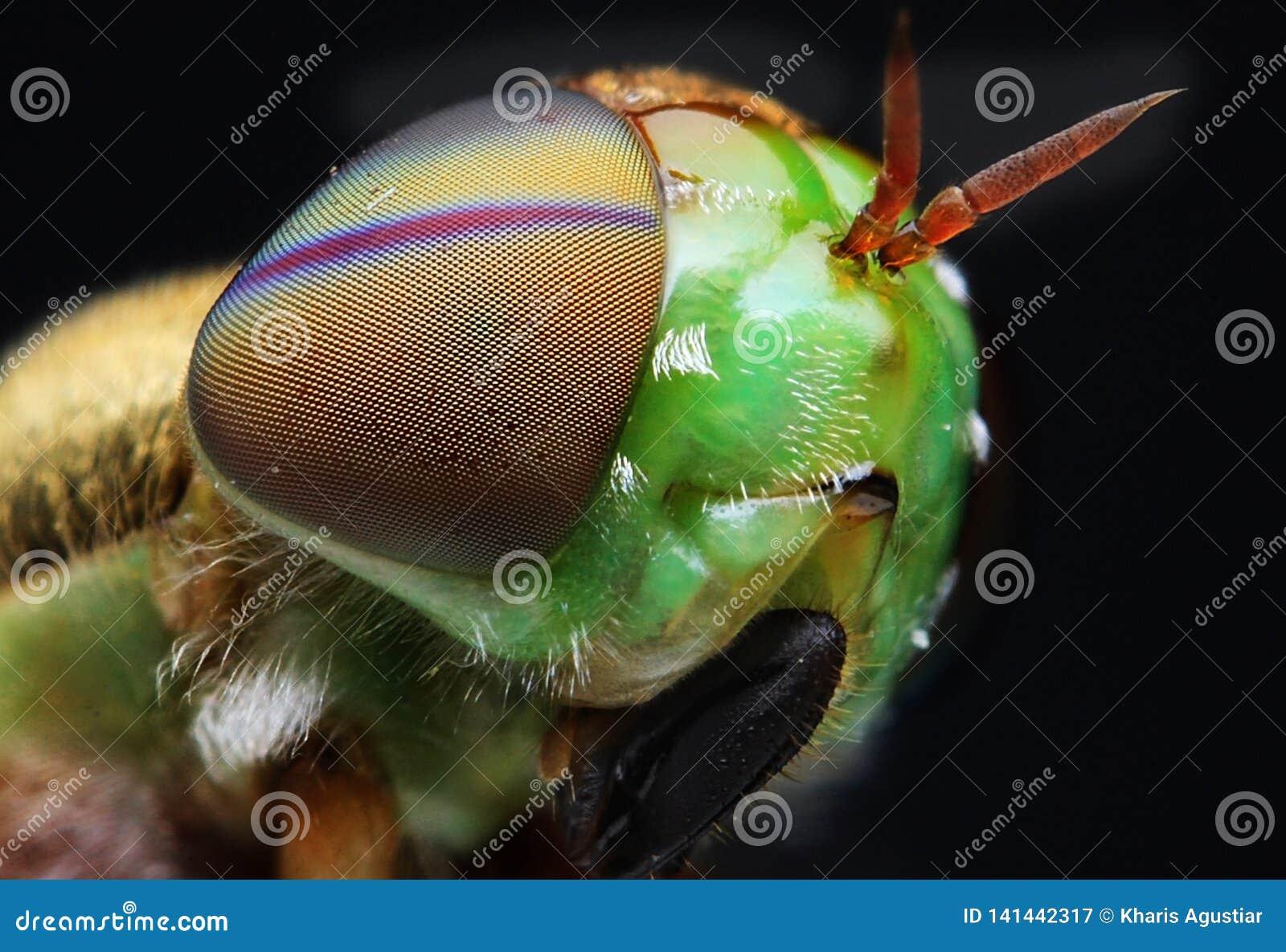 Detalj för flugasiktscloseup