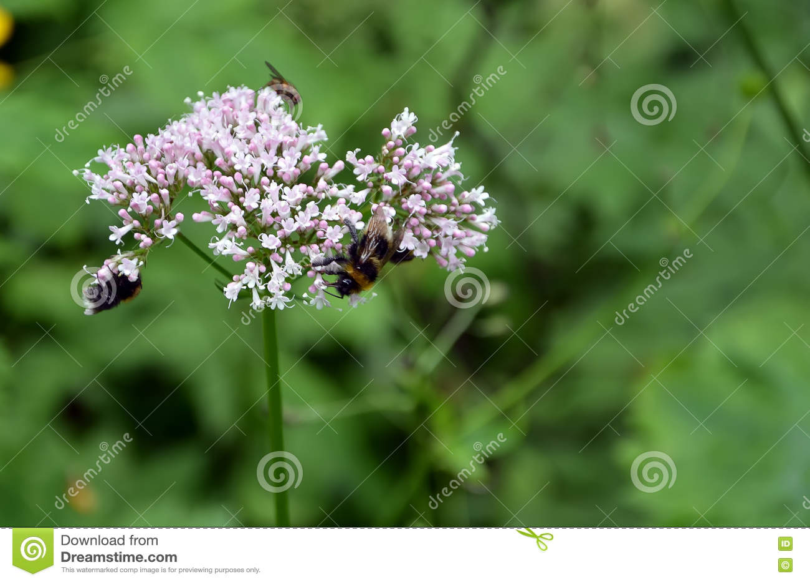 Detalle de la flor floreciente del prado con las abejas