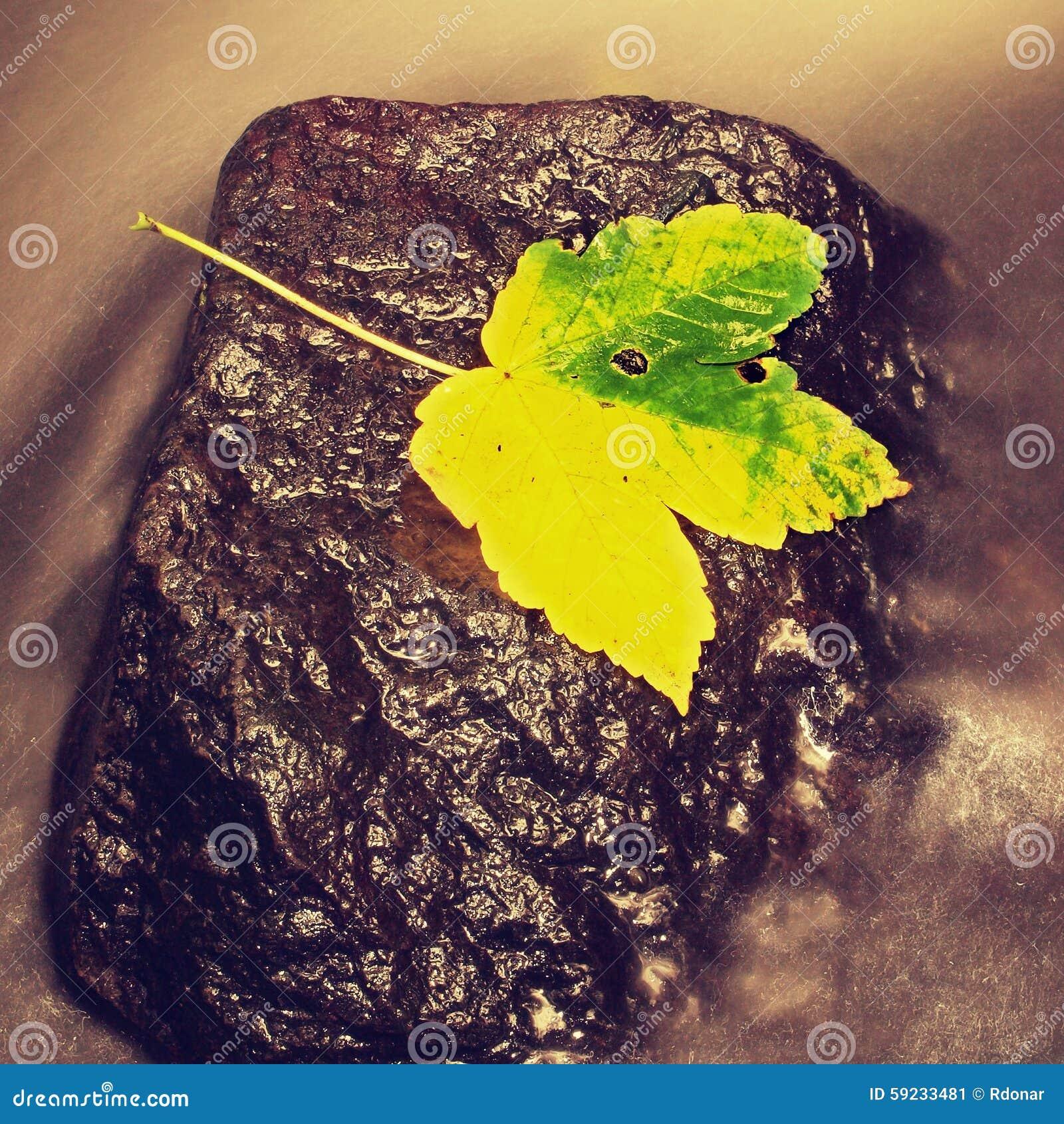 Download Detalle De La Hoja Colorida Quebrada Símbolo De La Caída Hojee En Piedra Mojada Del Deslizador En Agua Lechosa Fría De La Corrien Imagen de archivo - Imagen de hoja, frío: 59233481