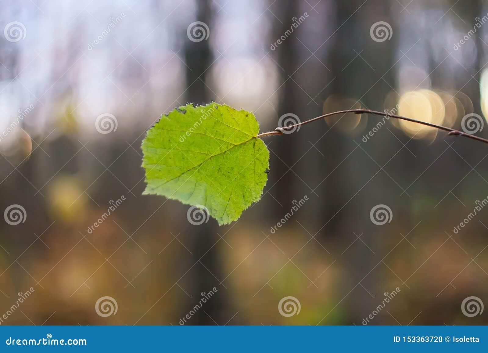Detalle de la naturaleza del oto?o Hoja verde en rama de árbol desnuda