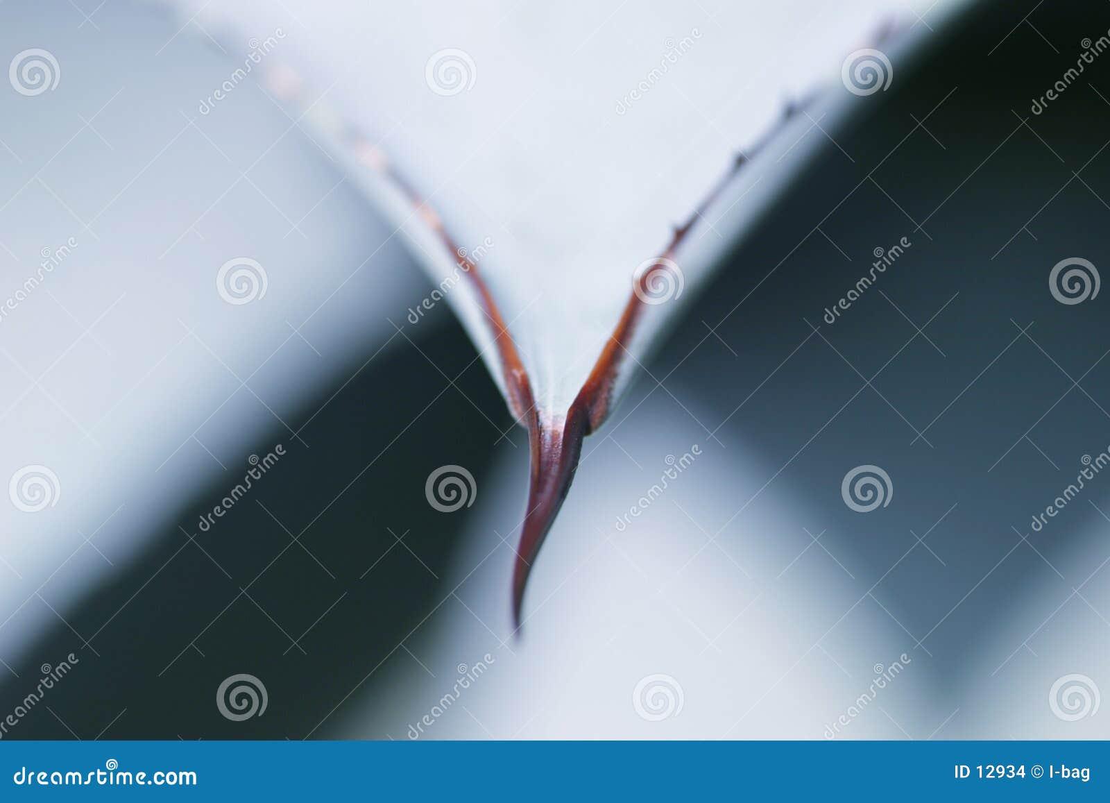 Detalle de la planta