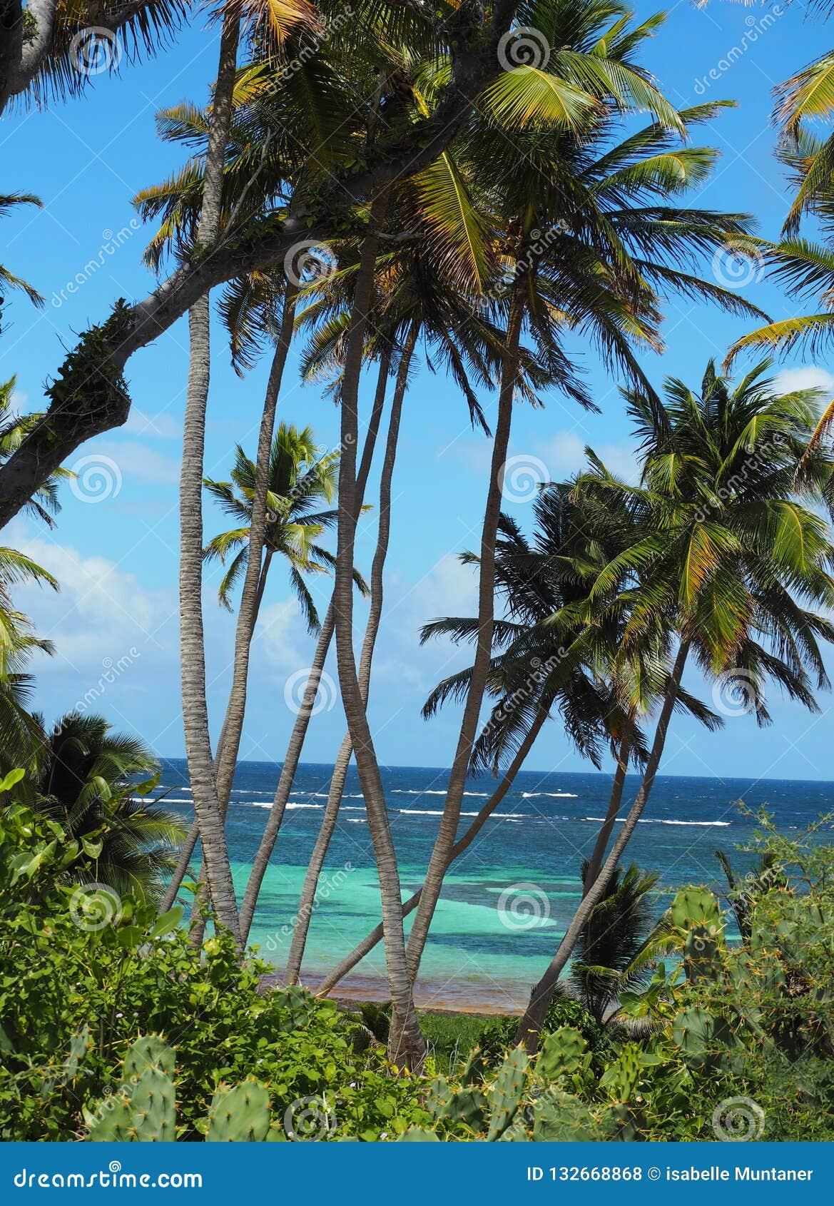 Detalle de la playa del casquillo Chavalier en la isla de Martinica