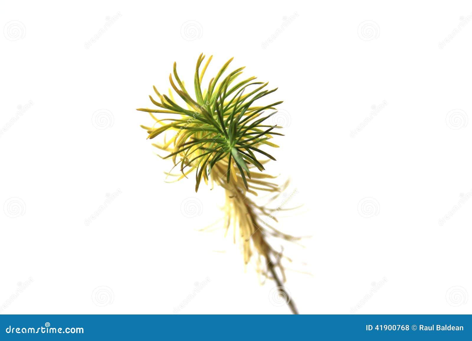 Detalle de una pequeña planta