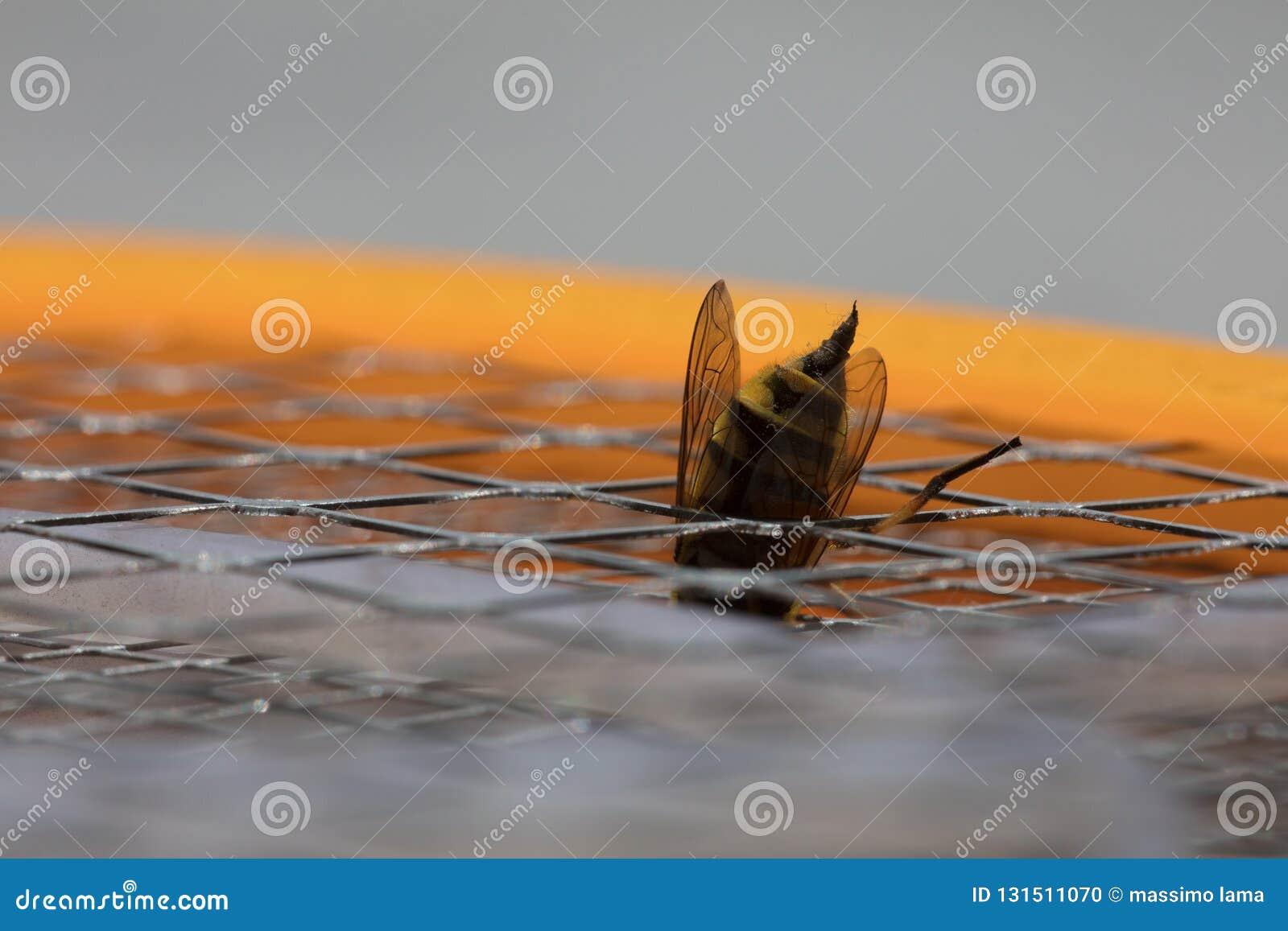 Detalle de una picadura de abeja