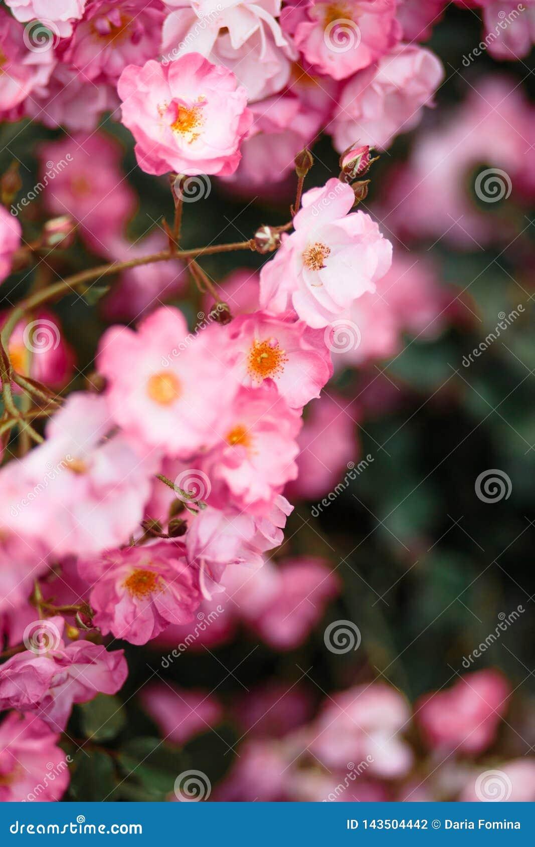 Detalle hermoso de las flores perfumadas del jardín botánico
