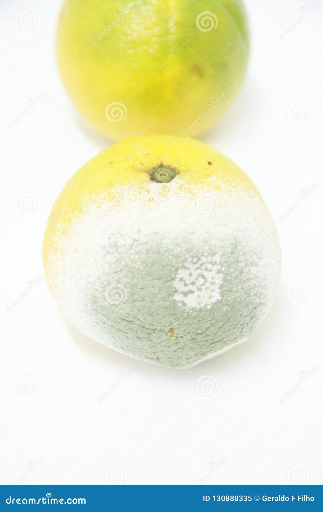 Detalle saludable aislado fruta anaranjada São Paulo Brazil del funghi del molde de la fruta del fondo
