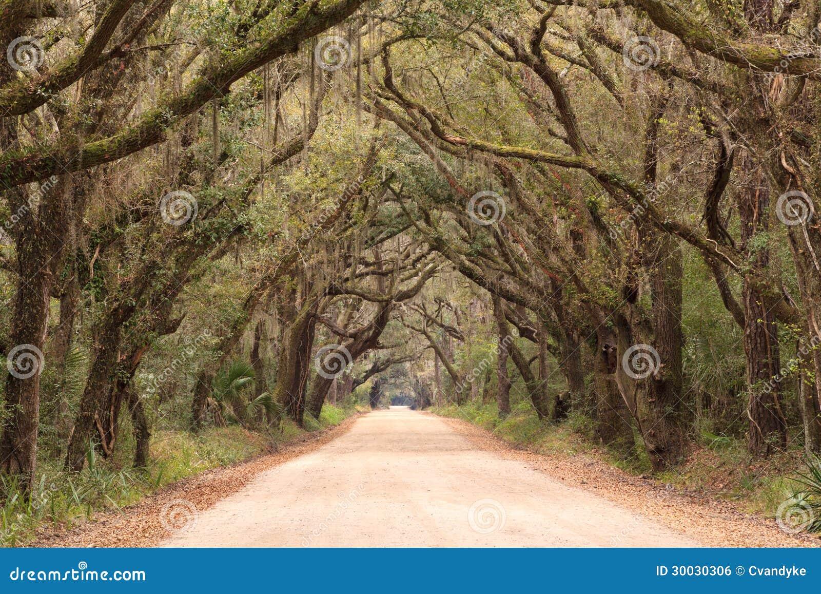 SC för tunnel för Oak för botanikfjärdväg spöklik