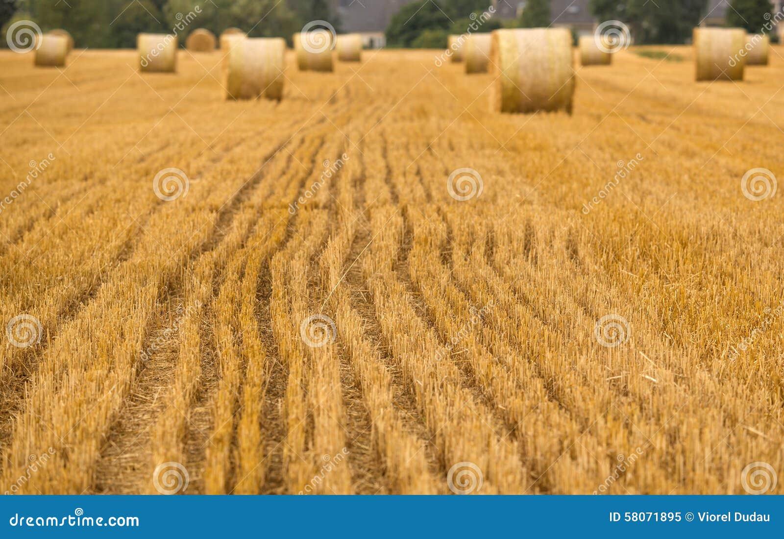 Dettagli del campo di agricoltura