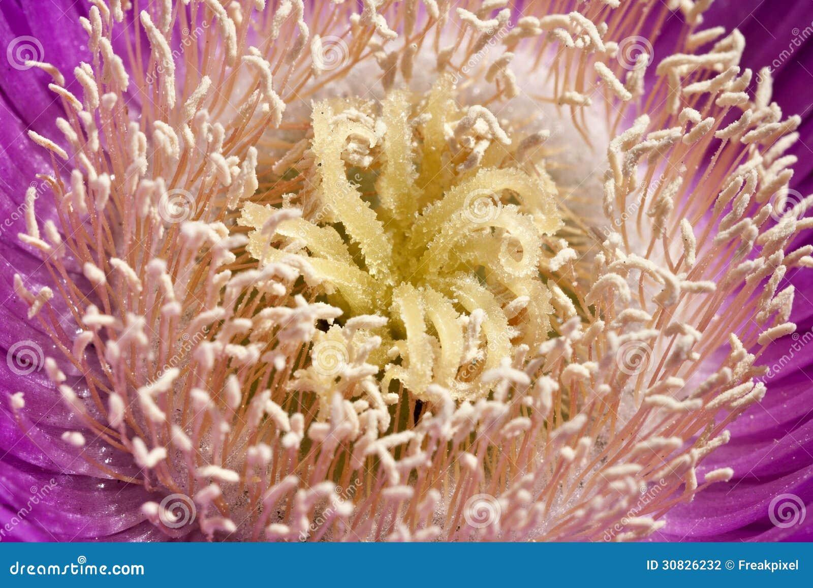 Dettagli del fiore grazioso