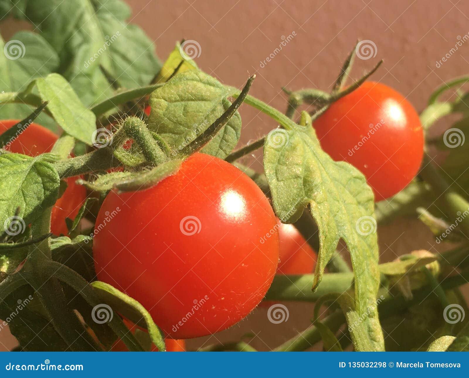 Dettaglio del pomodoro dello sherry