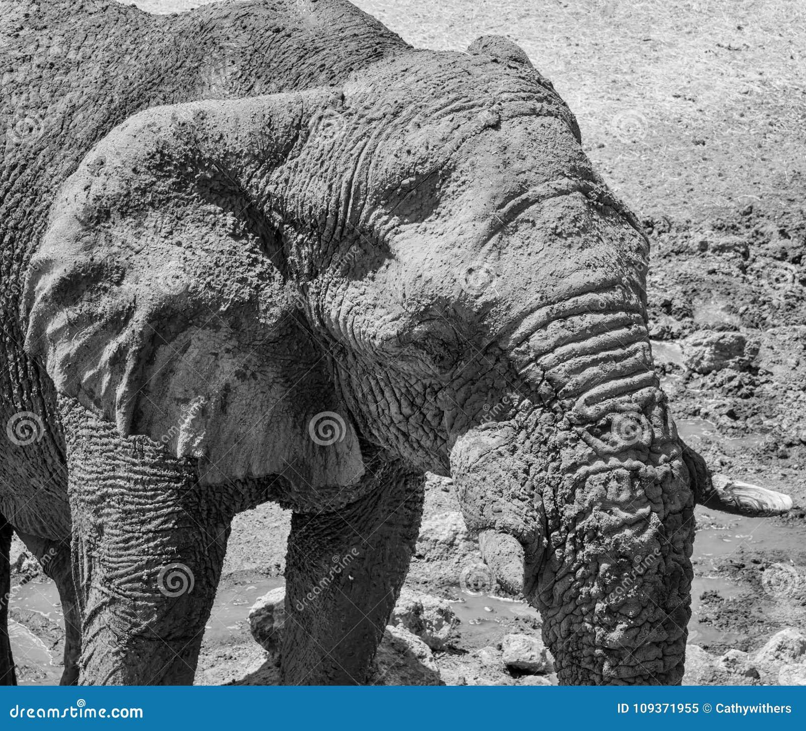 Dettaglio dell elefante