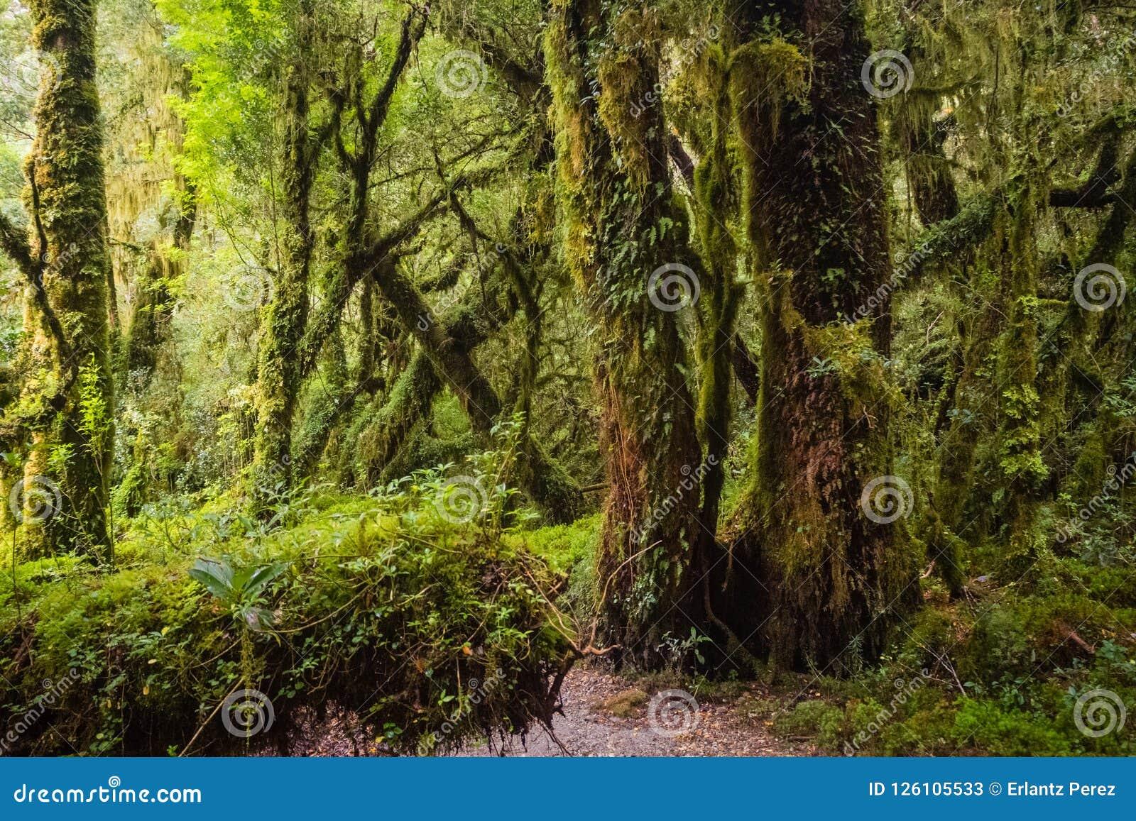 Dettaglio della foresta incantata in carretera australe, enca di Bosque