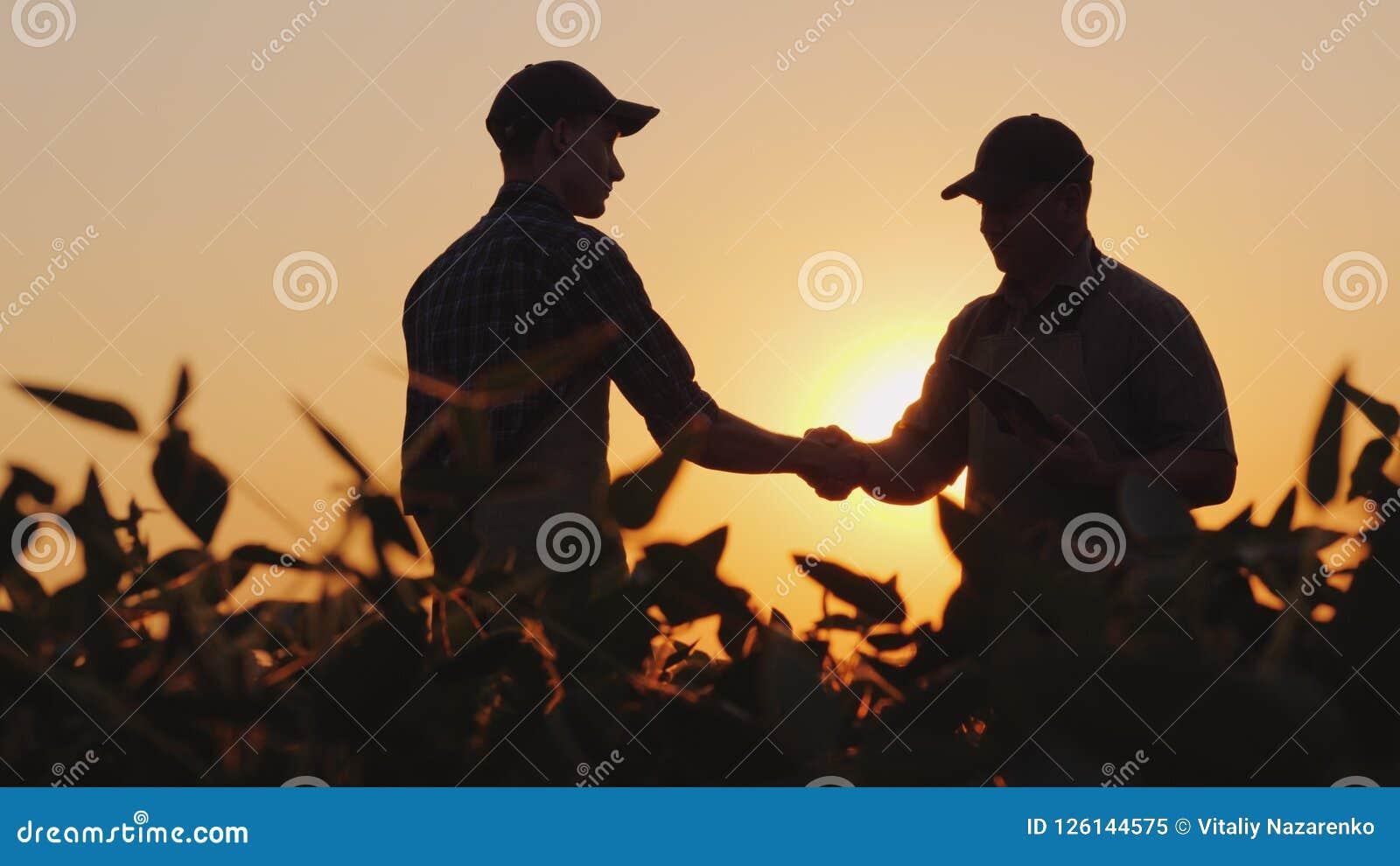 Deux agriculteurs parlent sur le champ, puis se serrent la main Utilisez un comprimé