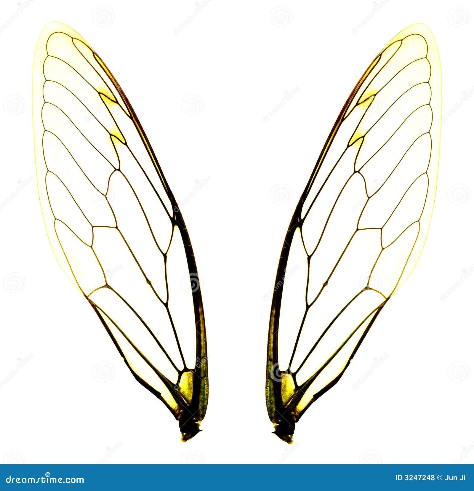 deux ailes de cigale photo stock image du ange jaune 3247248. Black Bedroom Furniture Sets. Home Design Ideas