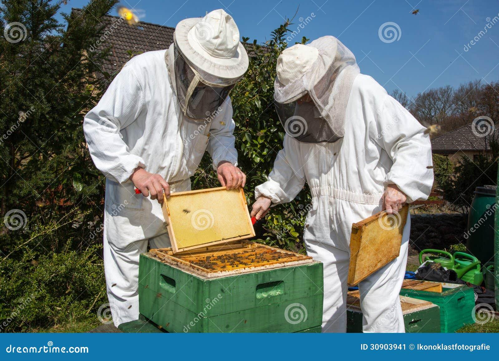 Deux apiculteurs maintenant la ruche d abeille