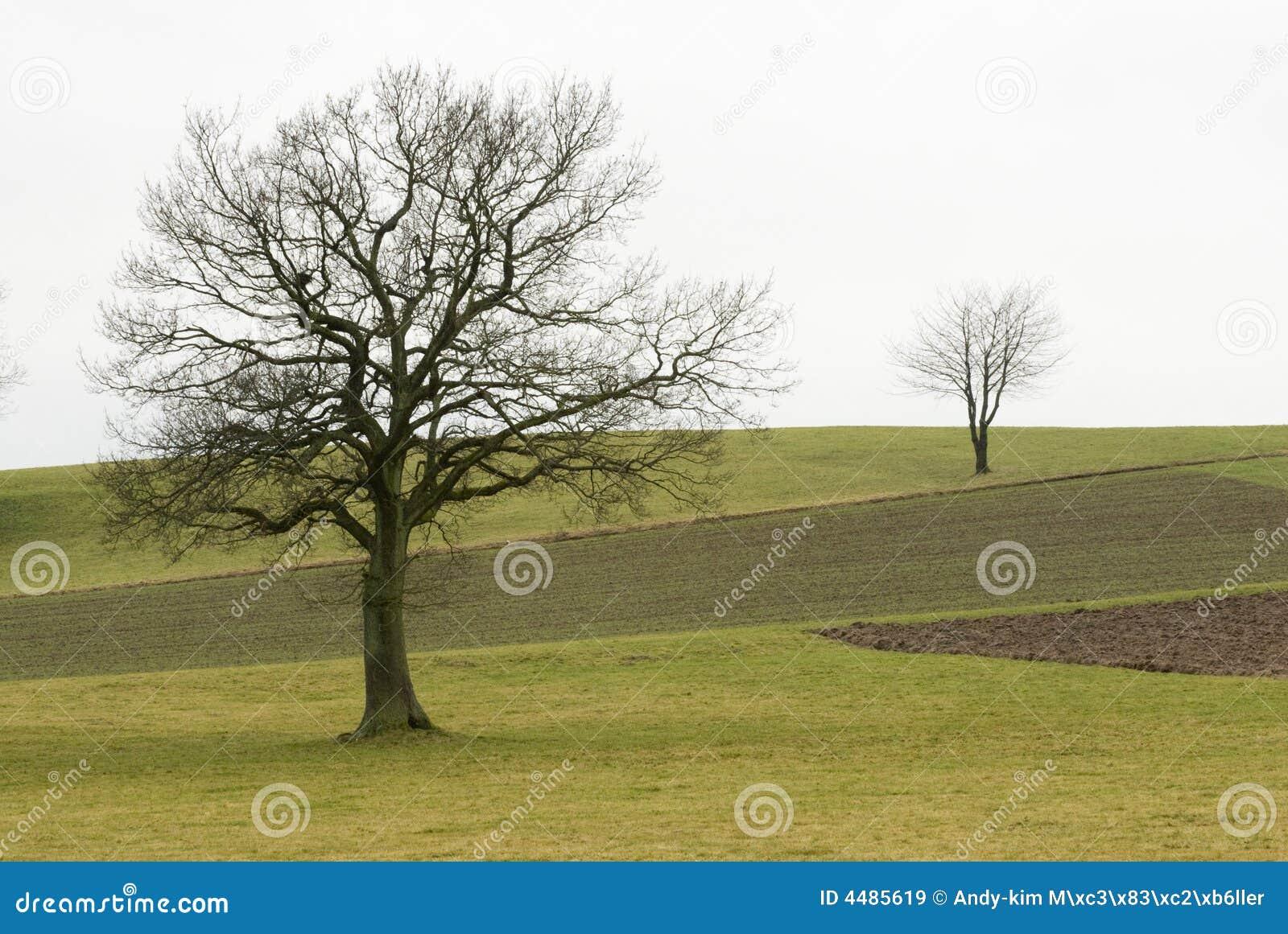 Deux arbres sur une zone