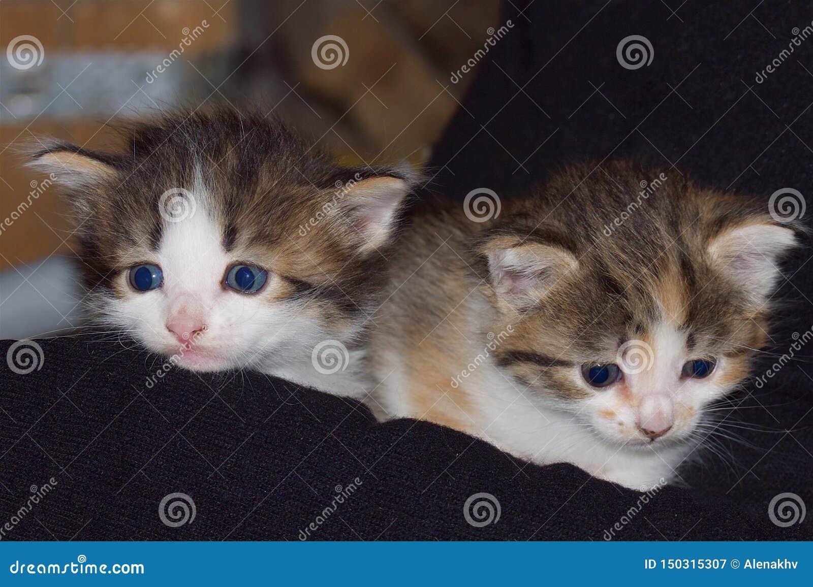 Deux chatons mélangés de couleurs sur un fond foncé