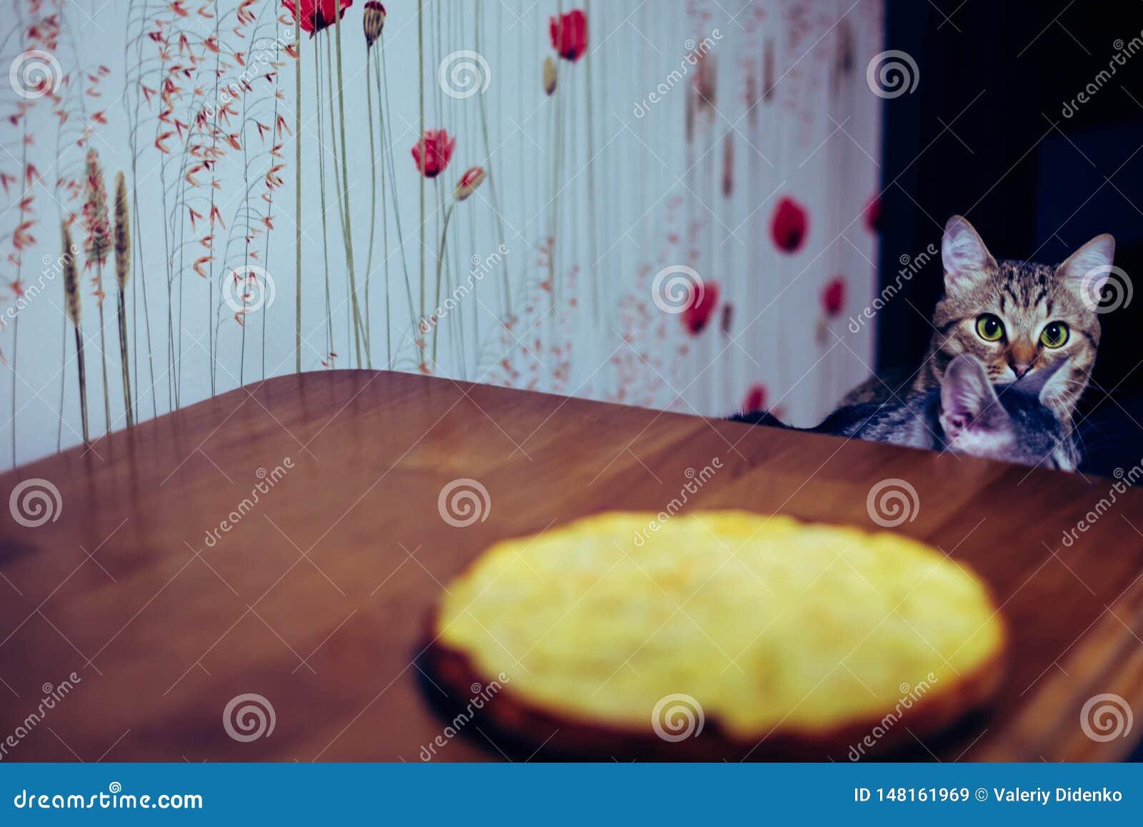 Deux chatons se reposent devant la table