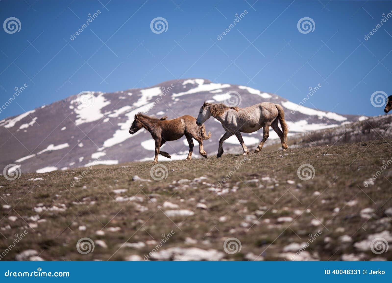 Deux chevaux fonctionnant dans le domaine