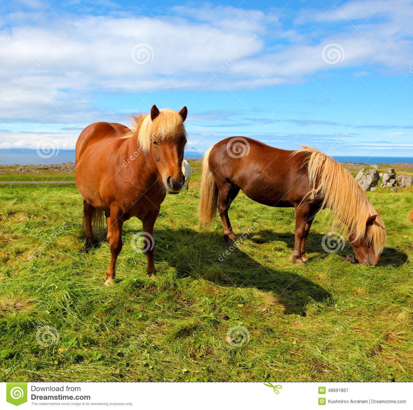 Deux chevaux gratuit - Chevaux gratuits ...
