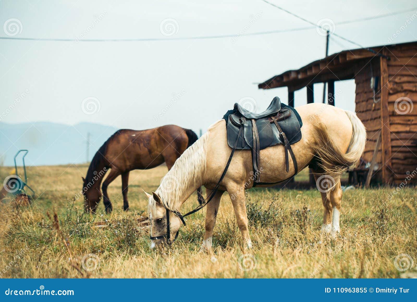 Deux chevaux sur le ranch