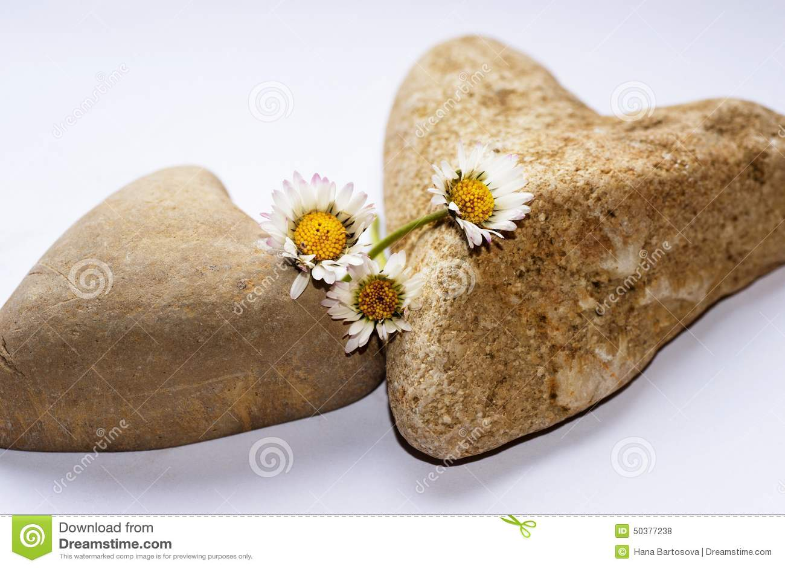 Deux coeurs de pierre avec trois marguerites