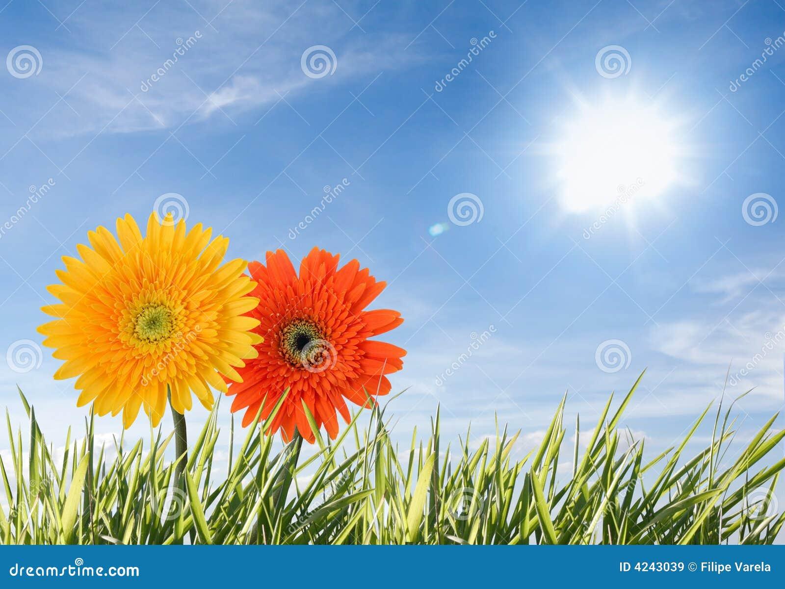 Deux fleurs d isolement contre le ciel bleu