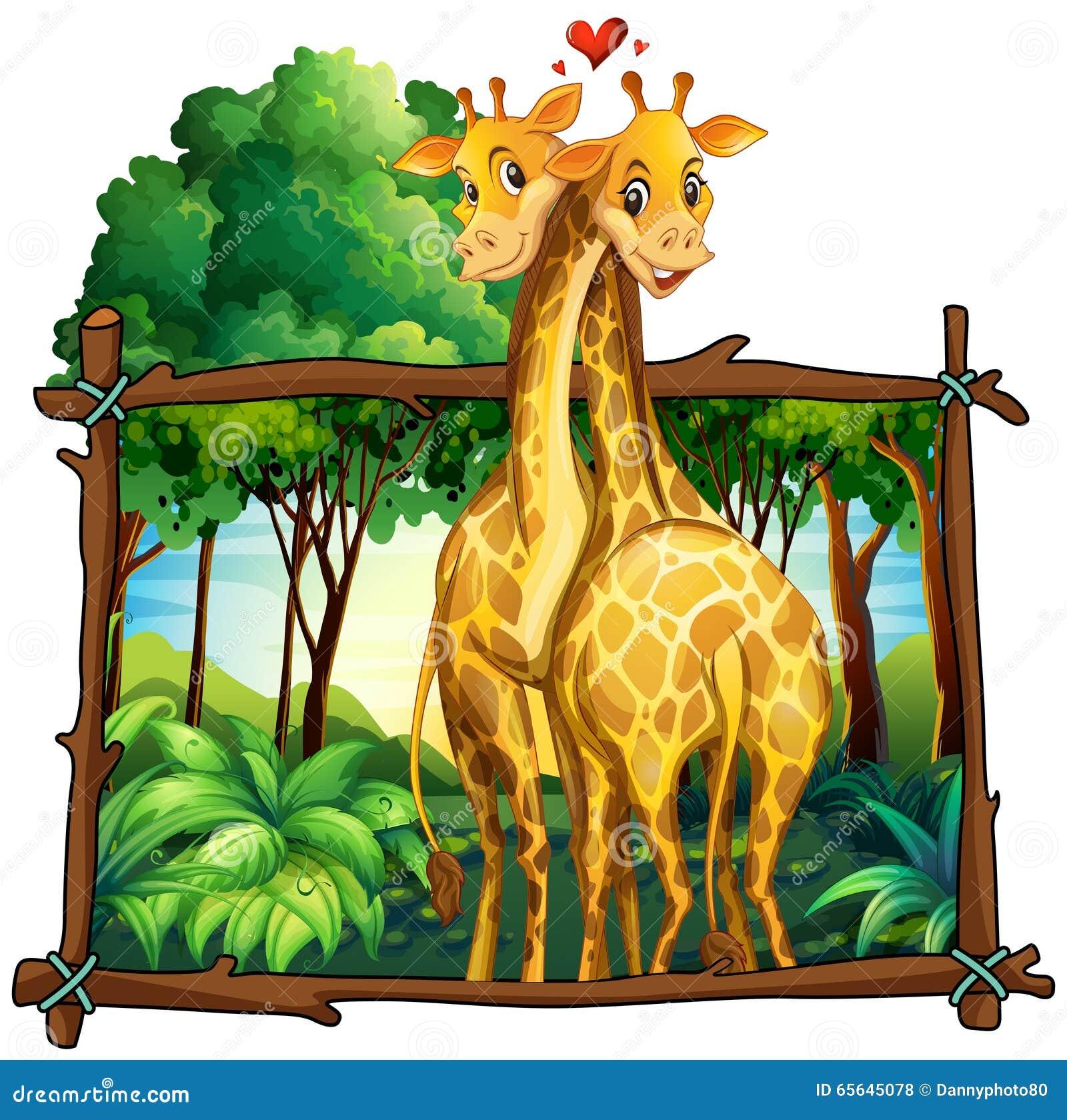 Deux girafes étreignant dans la jungle