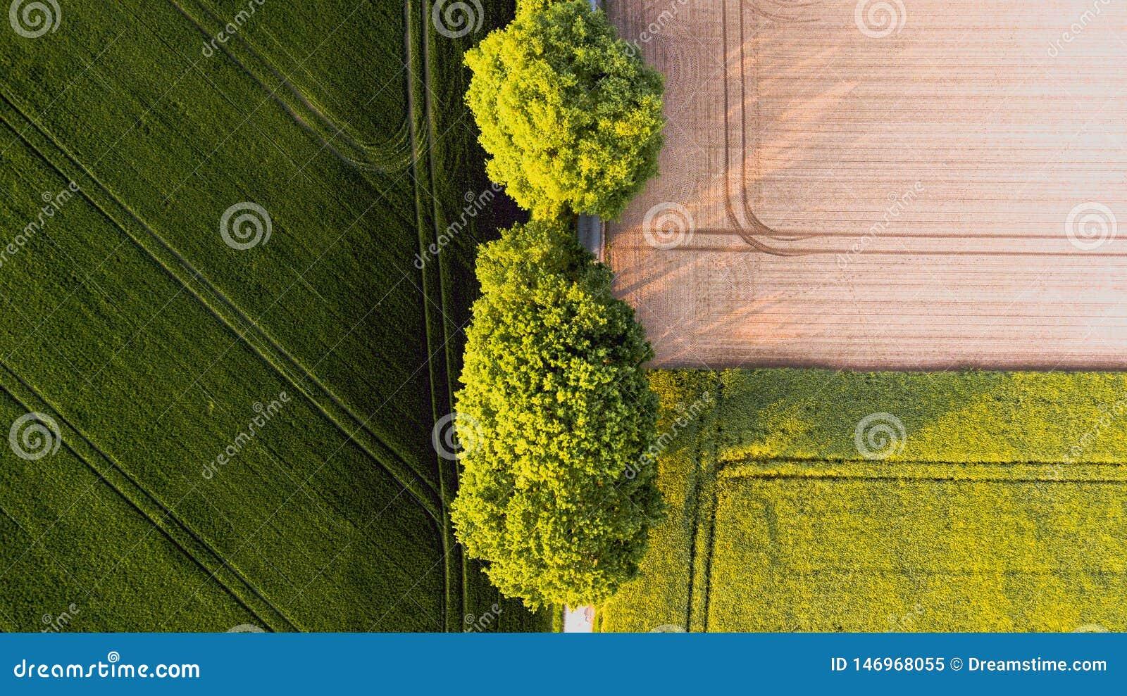 Deux grands arbres verts entre un champ jaune brun et un champ vert